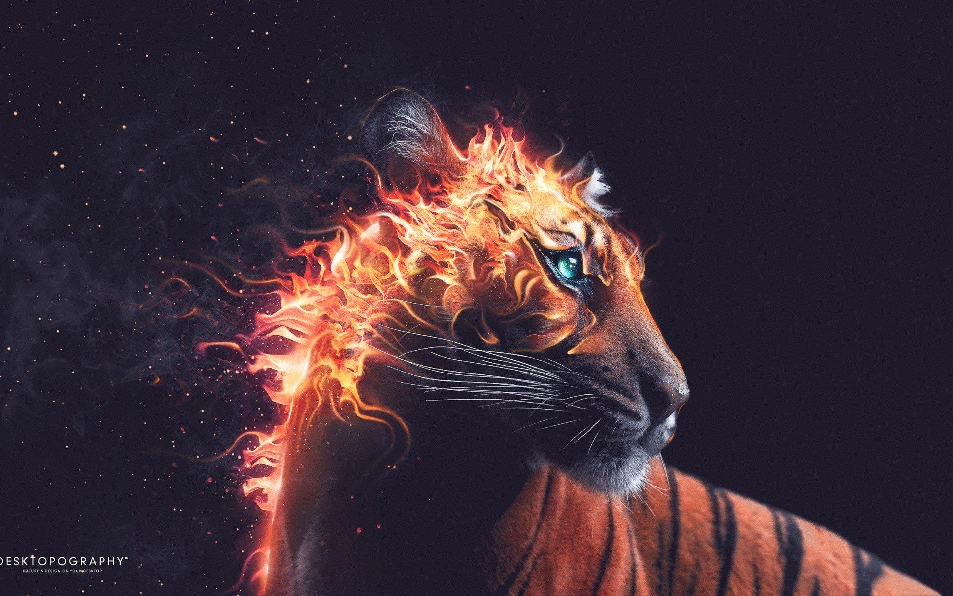 Fondos de pantalla Tigre de fuego