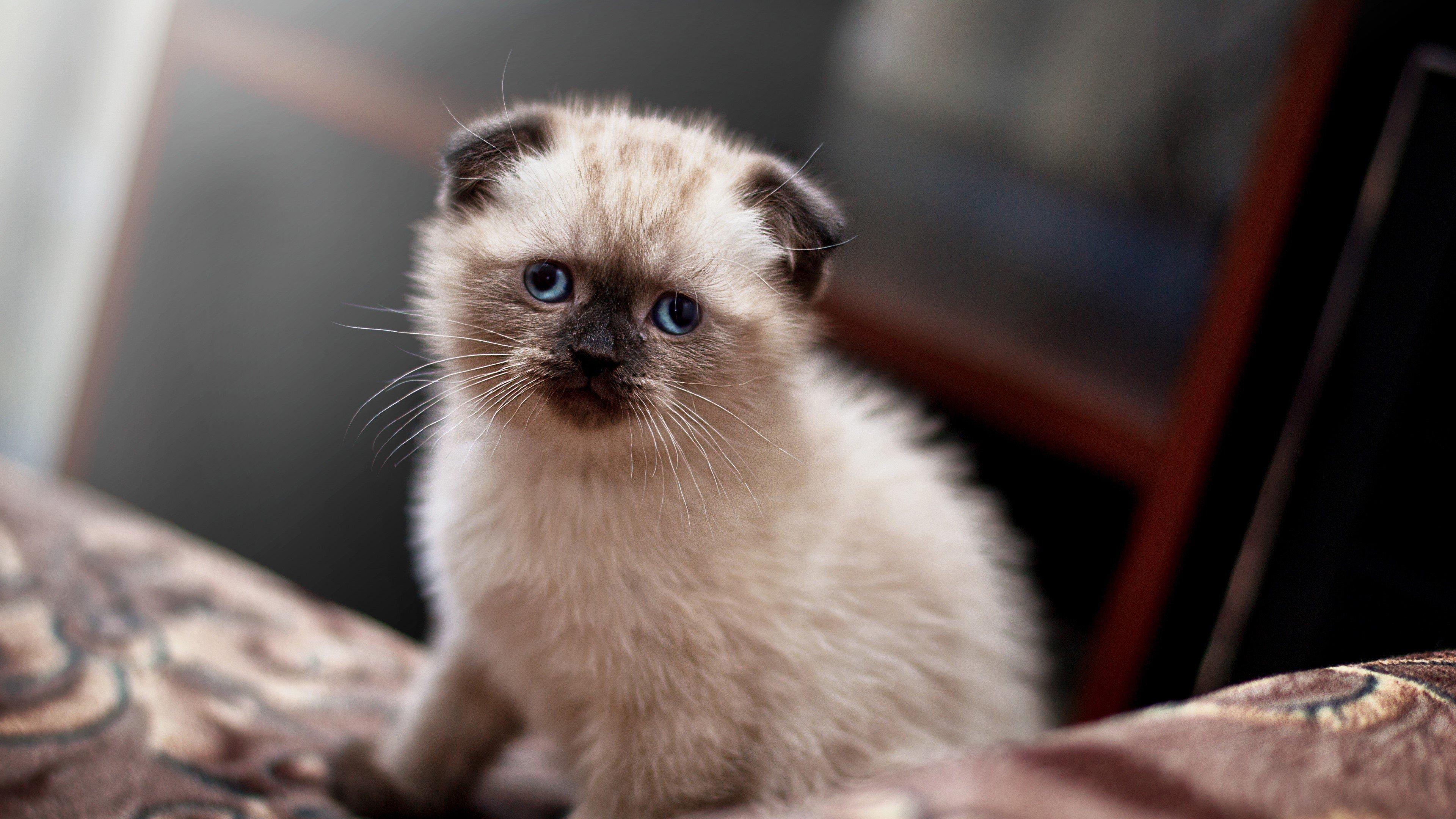 Fondos de pantalla Un bonito gato