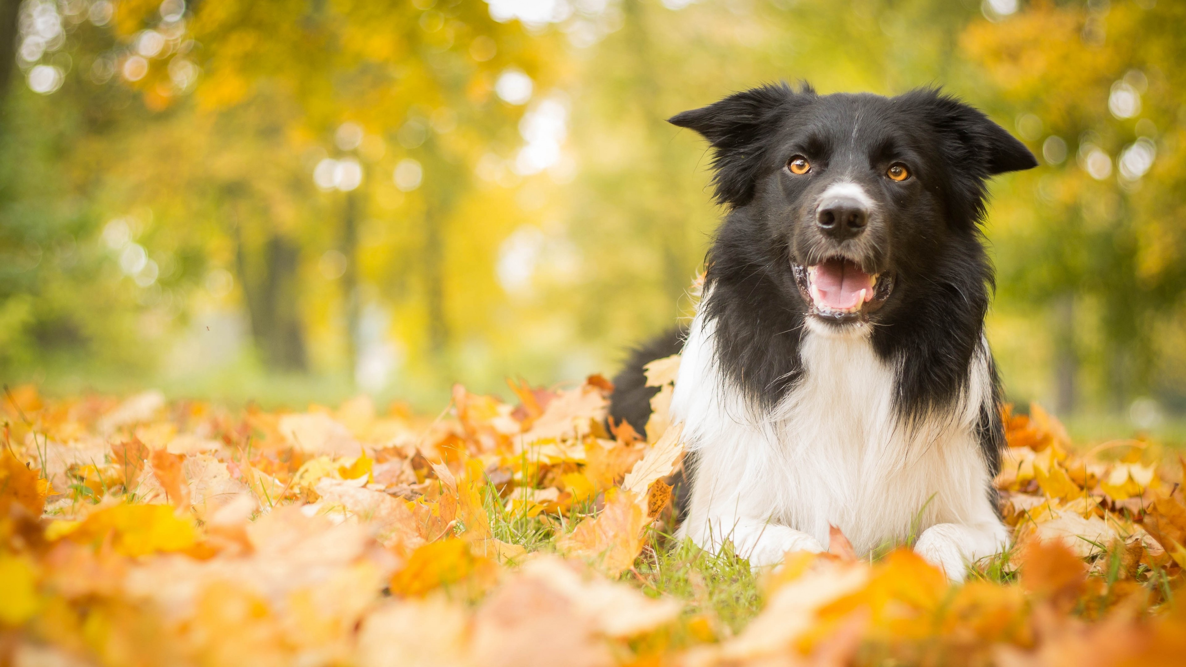 Wallpaper A puppy in autumn leaves