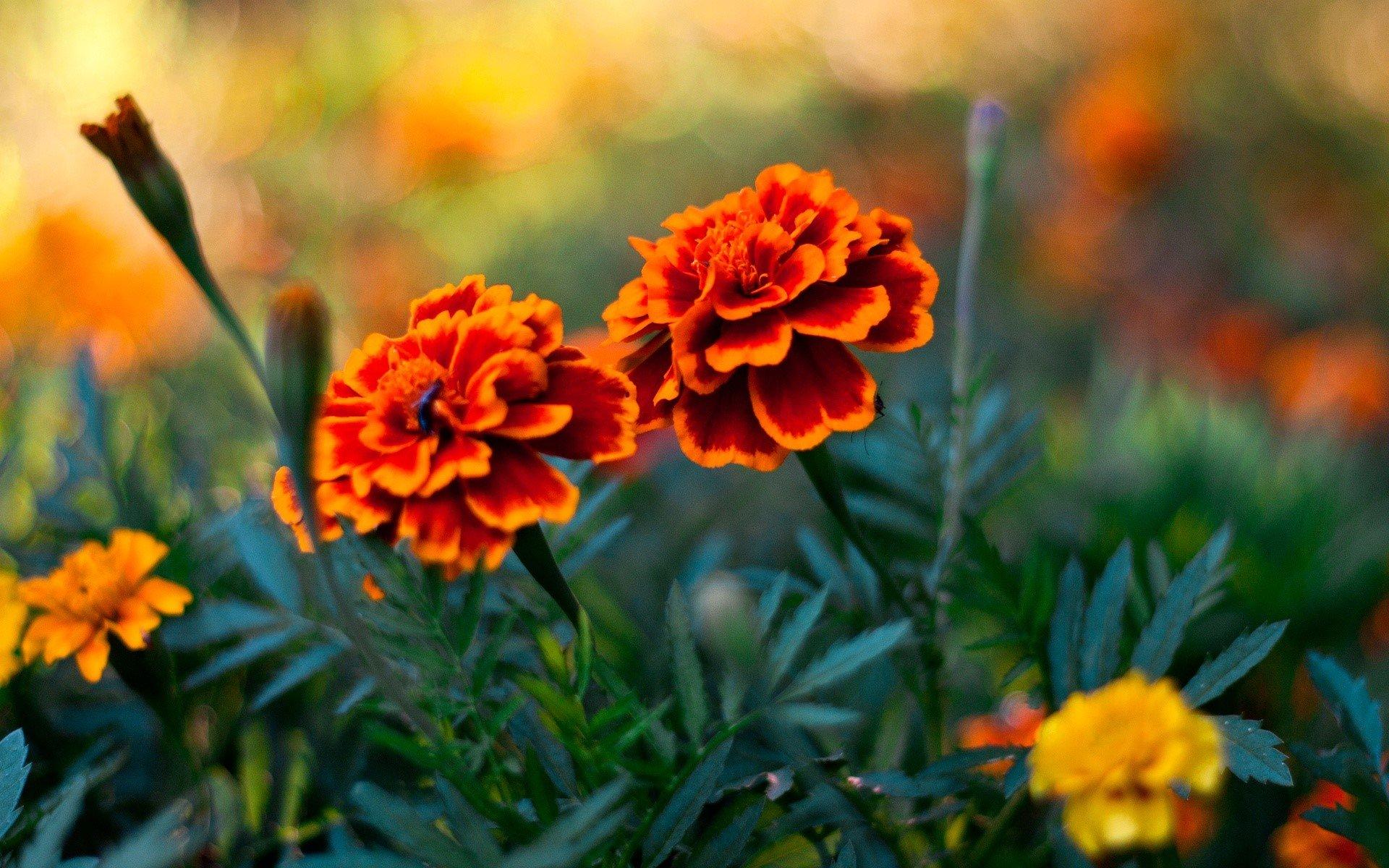 Fondos de pantalla Un par de flores