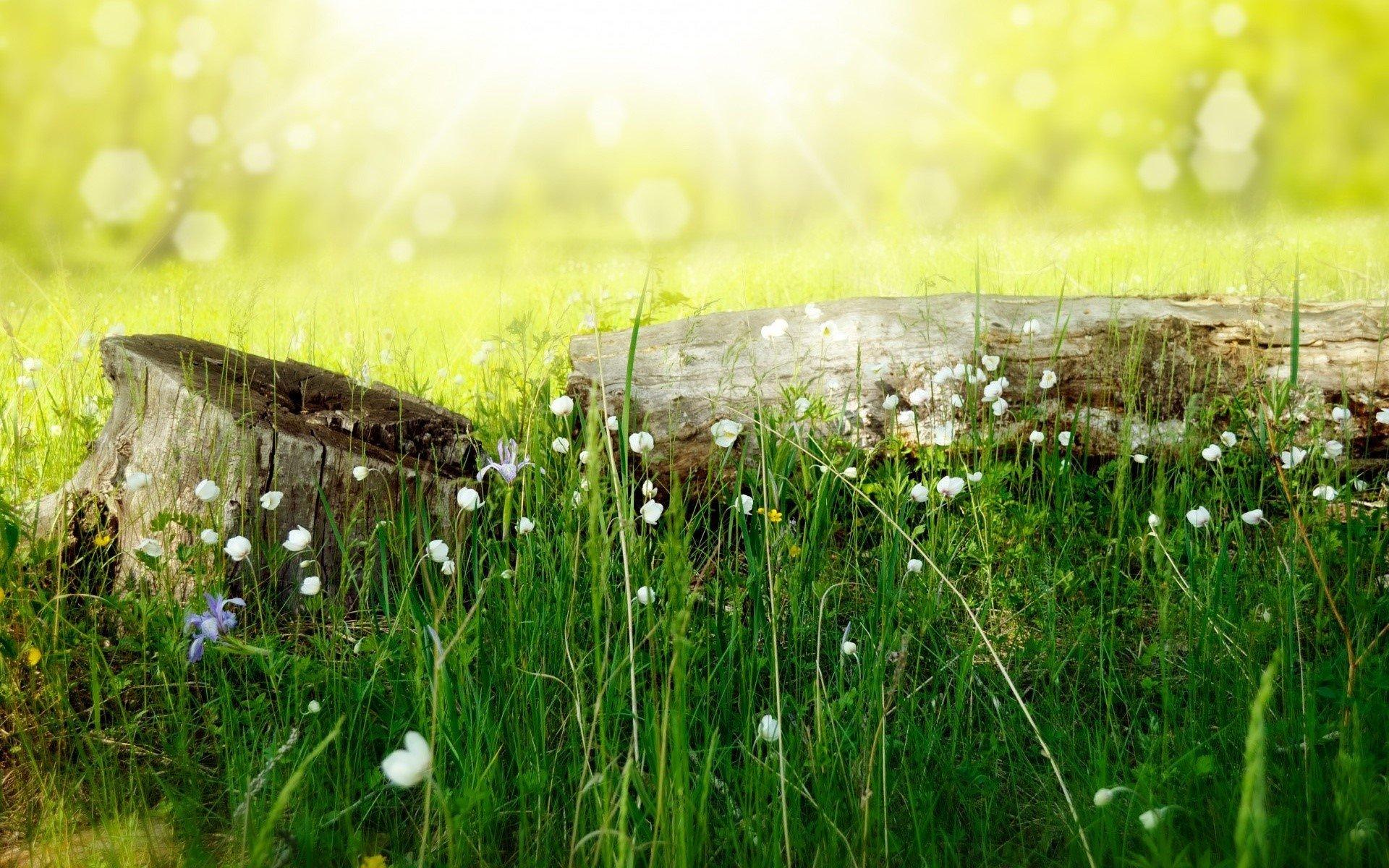 Fondo de pantalla de Un prado en verano Imágenes