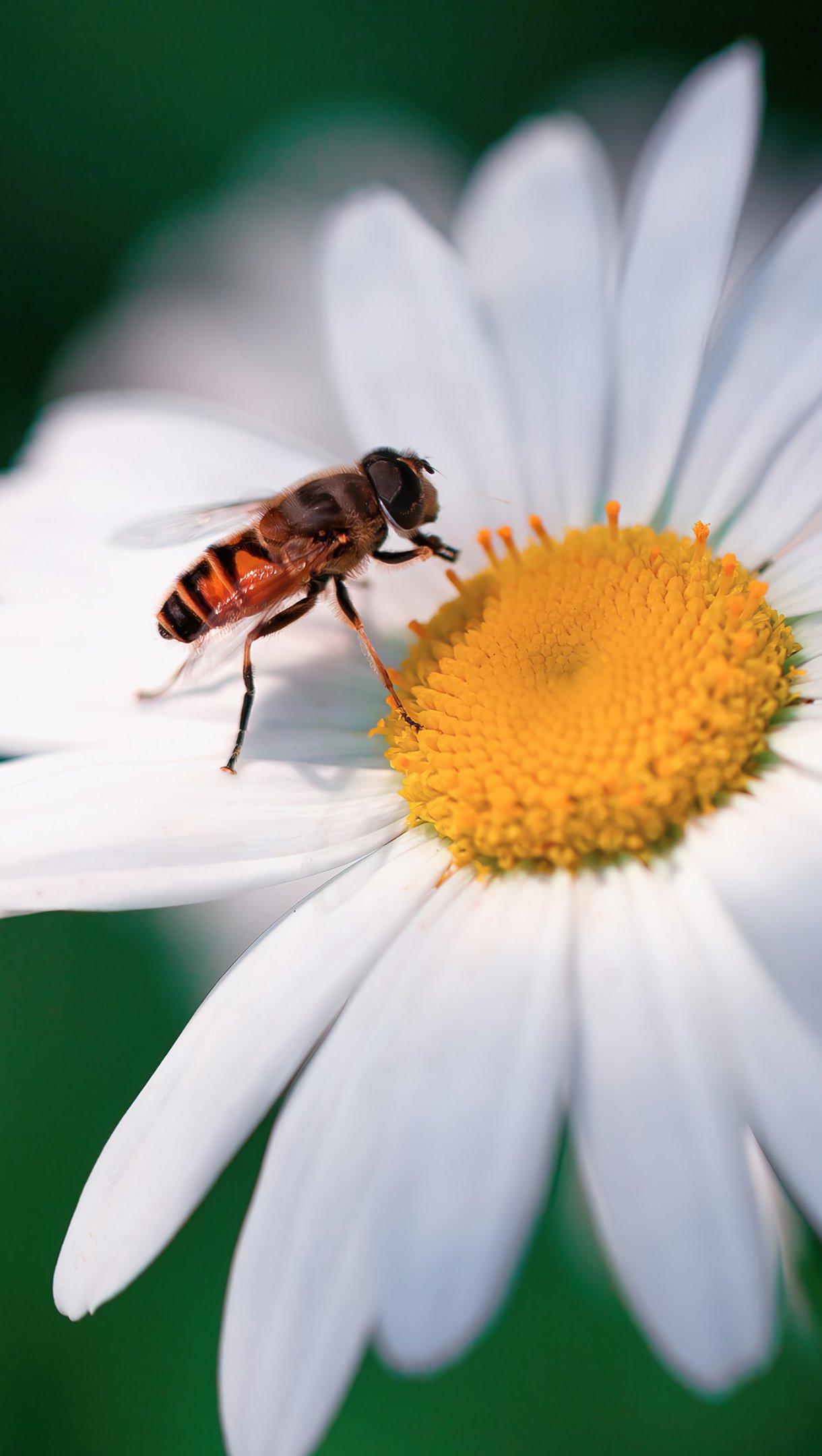 Wallpaper Bee on flower Vertical