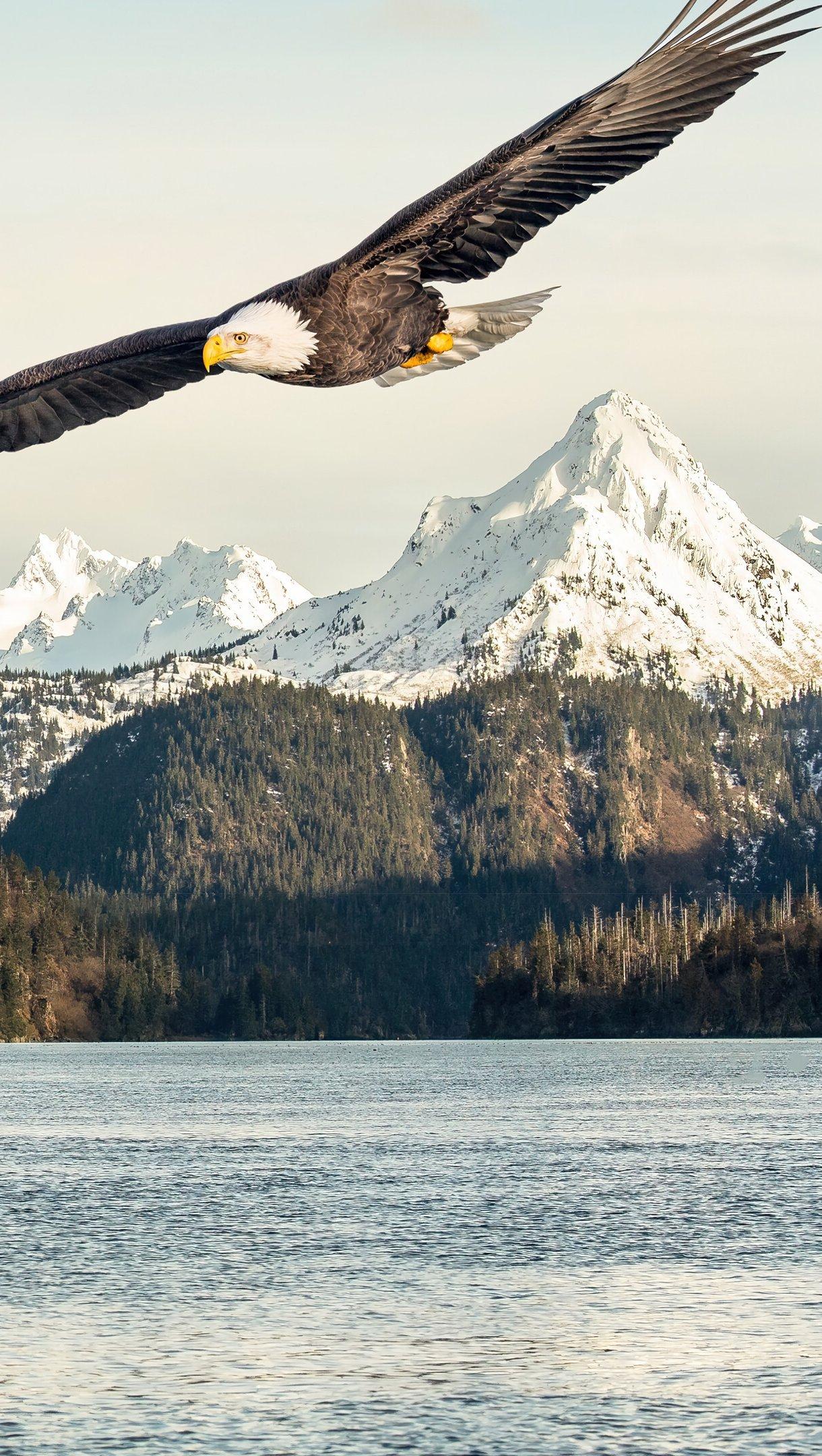 Wallpaper Eagle flying over lake Vertical