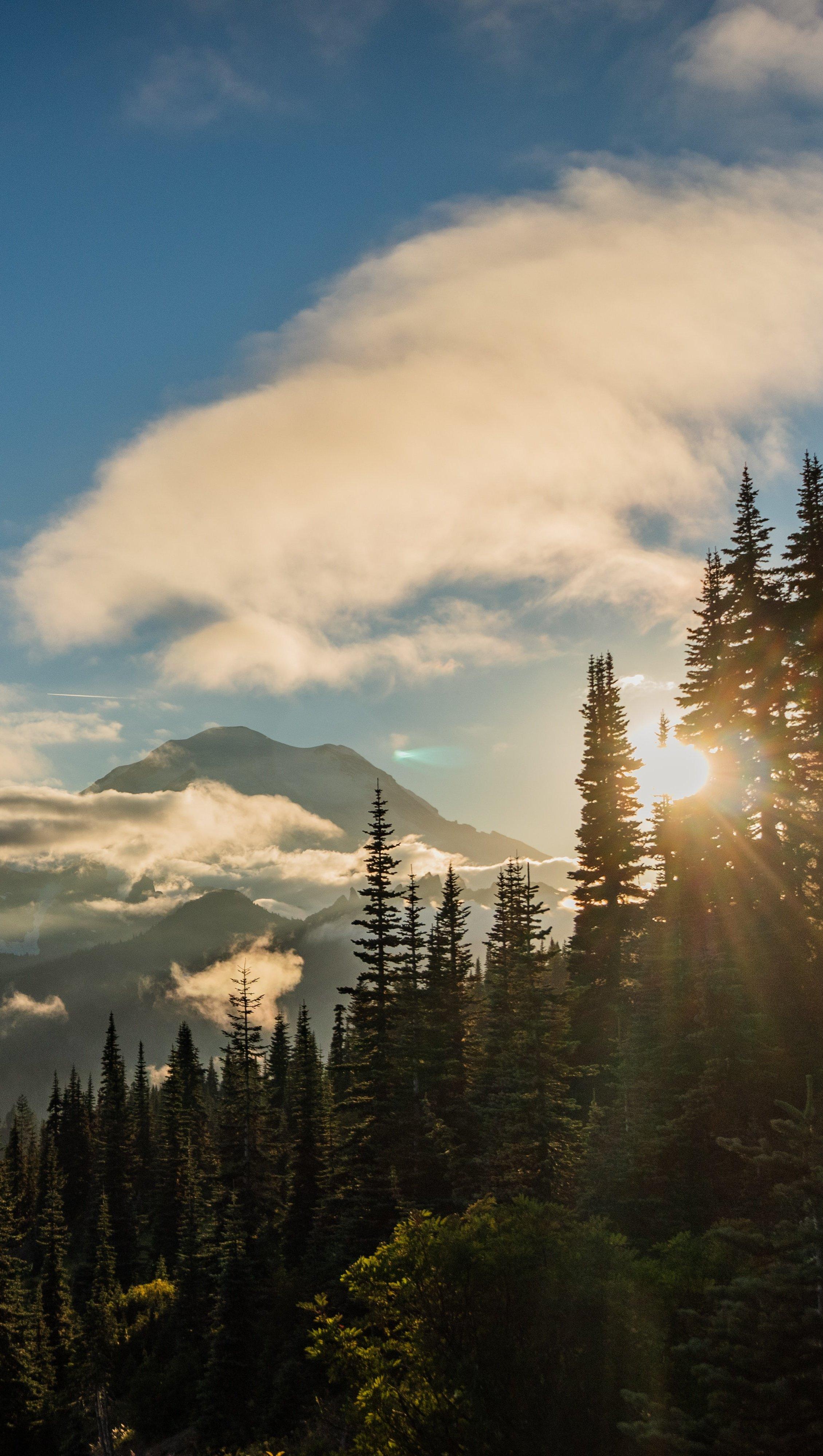Fondos de pantalla Amanecer en el bosque con montañas Vertical