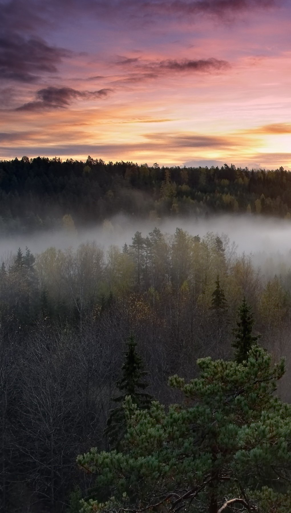 Wallpaper Nebulous dawn in the National Park Vertical
