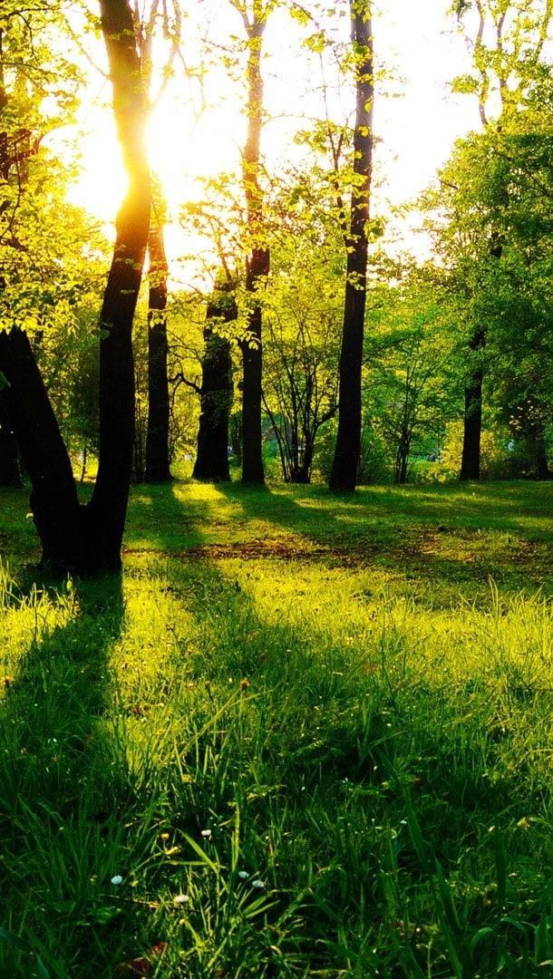 Wallpaper Trees against sunlight Vertical
