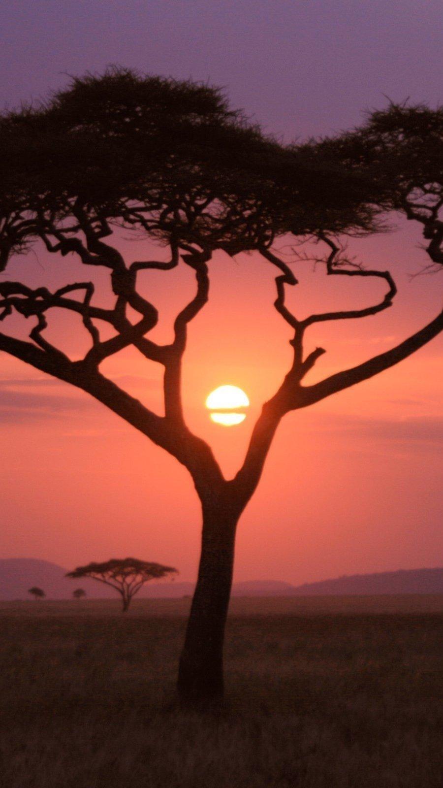 Fondos de pantalla Atardecer en Africa Vertical