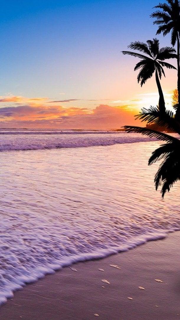 Fondos de pantalla Atardecer en la playa con palmas Vertical