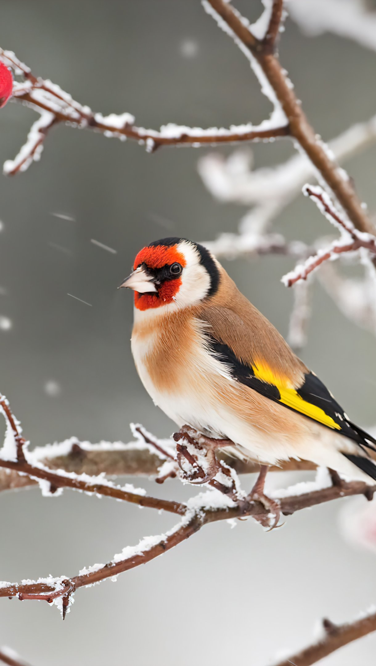 Wallpaper Bird with red head in the snow Vertical