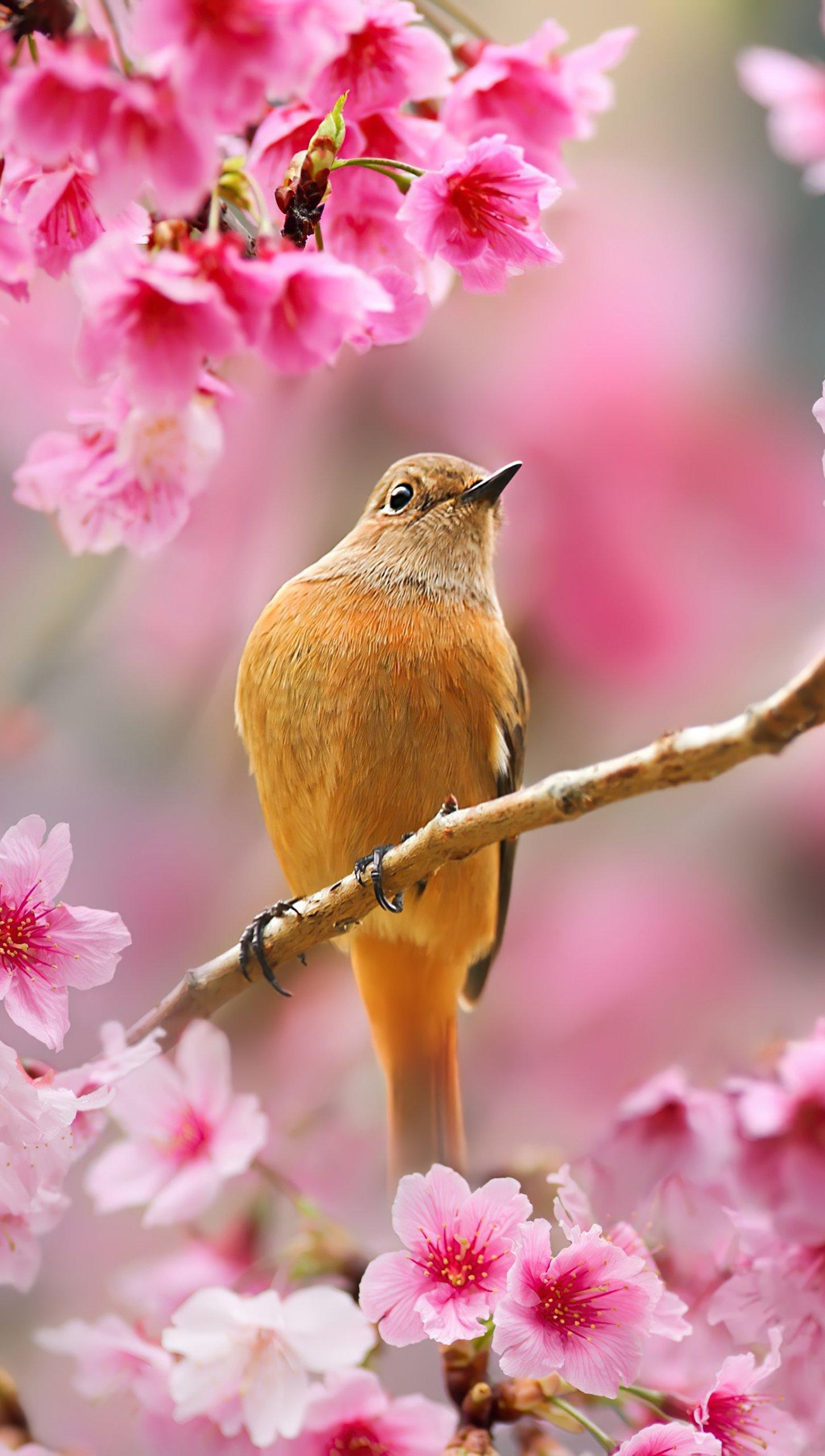 Fondos de pantalla Ave sobre flor de cerezo Vertical