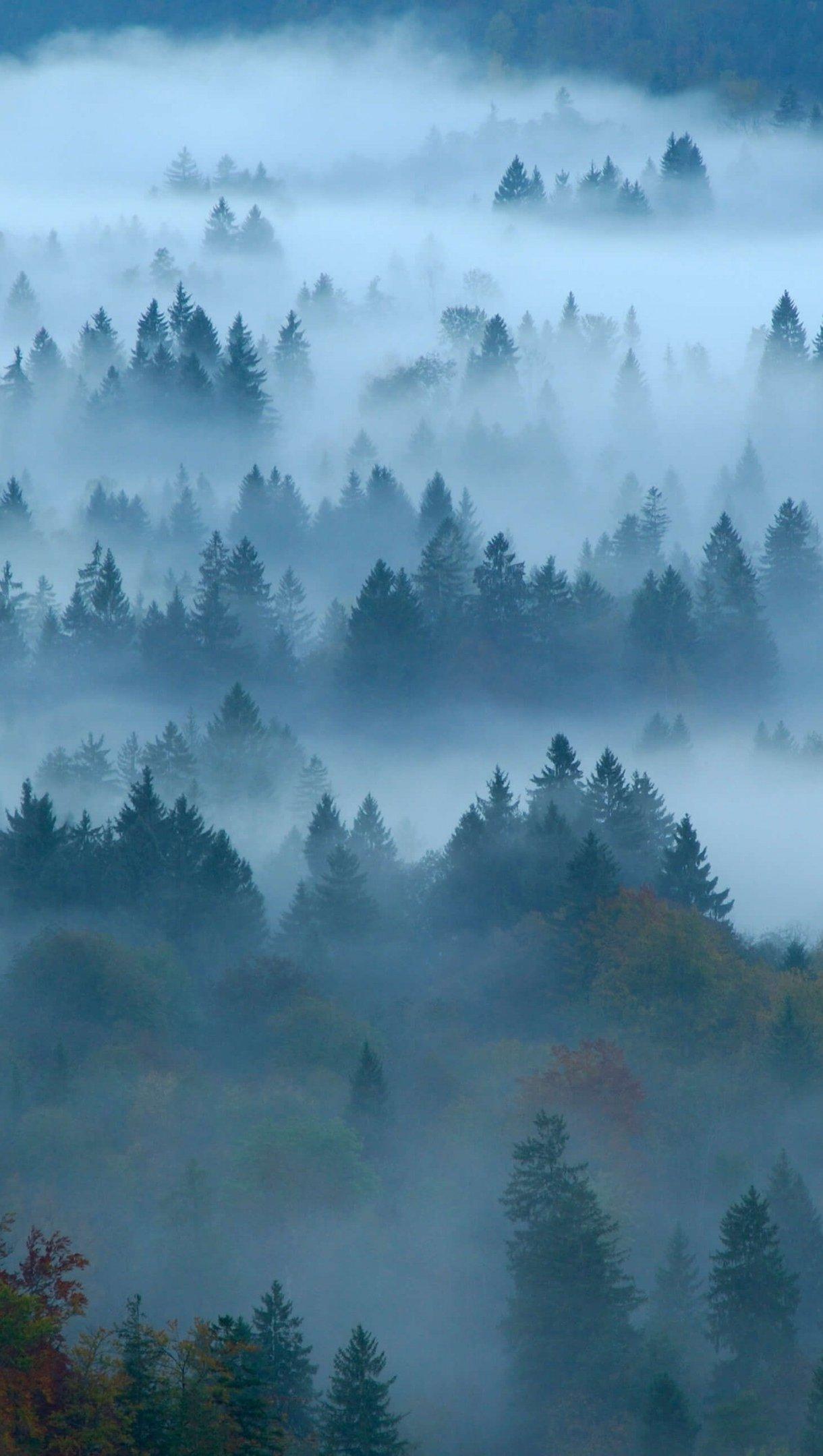 Fondos de pantalla Bosque con niebla Vertical