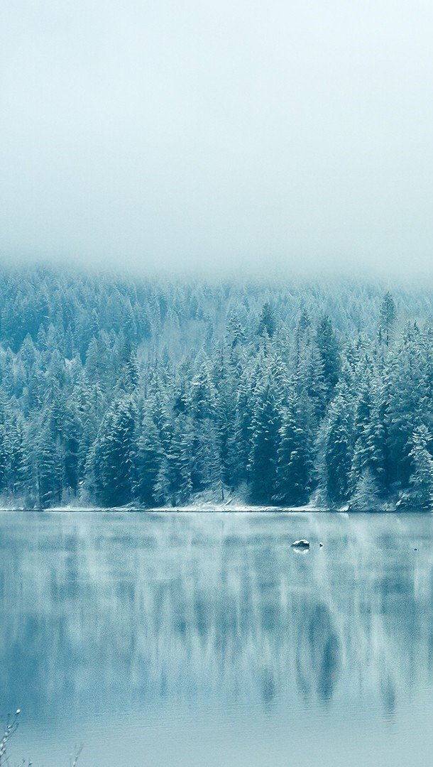 Fondos de pantalla Bosque congelado Vertical