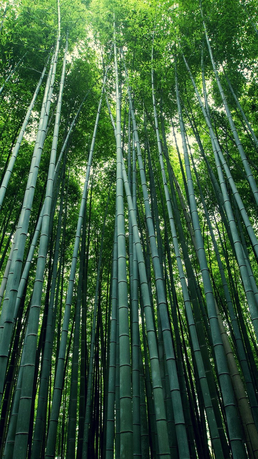 Wallpaper Bamboo forest Vertical