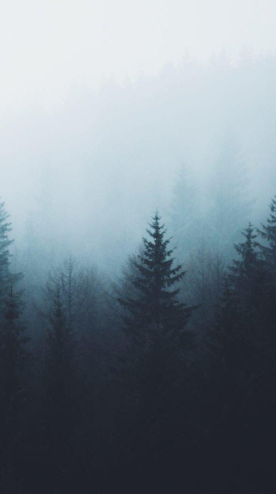 Fondos de pantalla Bosque de pinos en la niebla Vertical