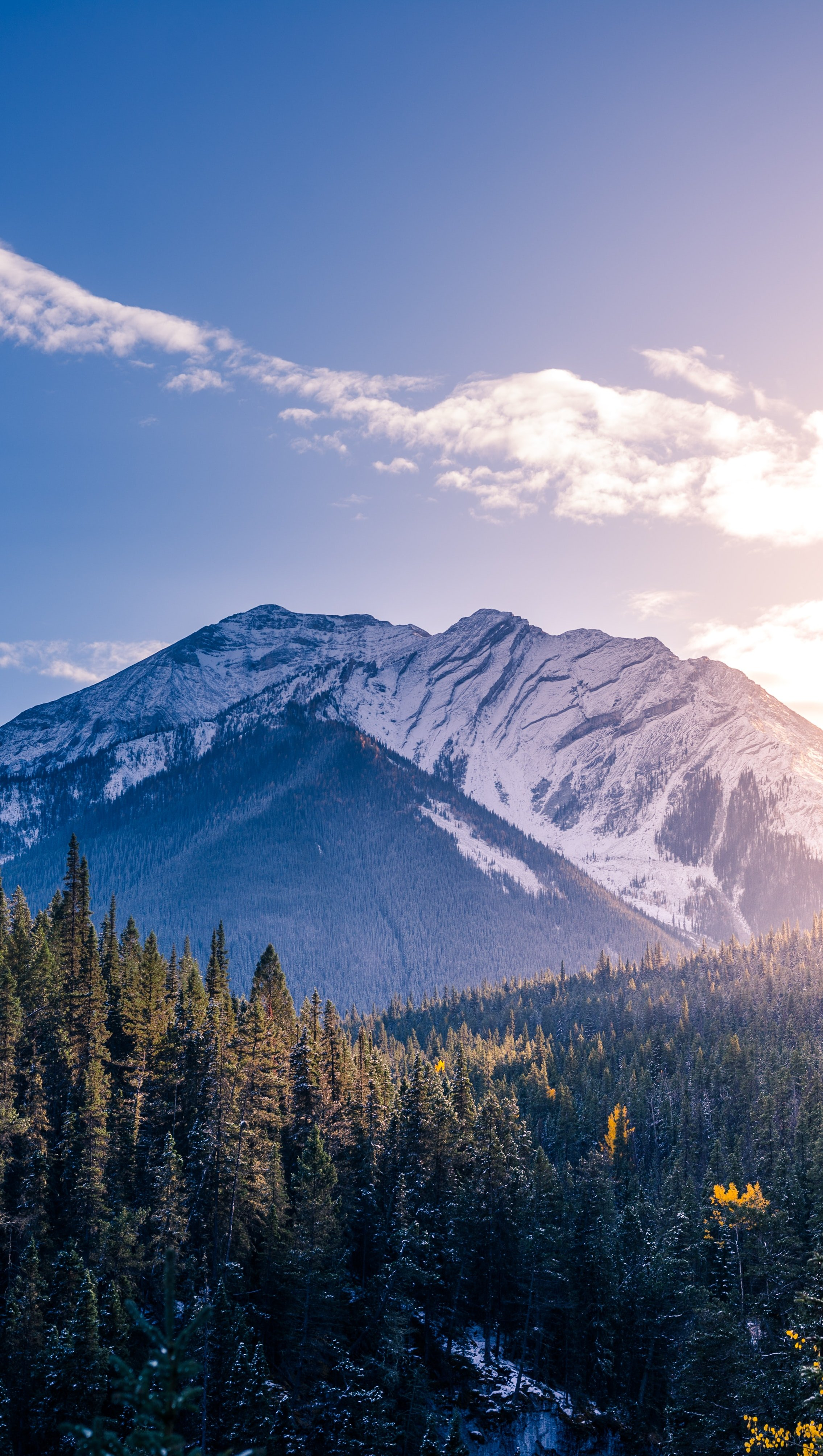 Fondos de pantalla Bosque en las montañas al amanecer Vertical