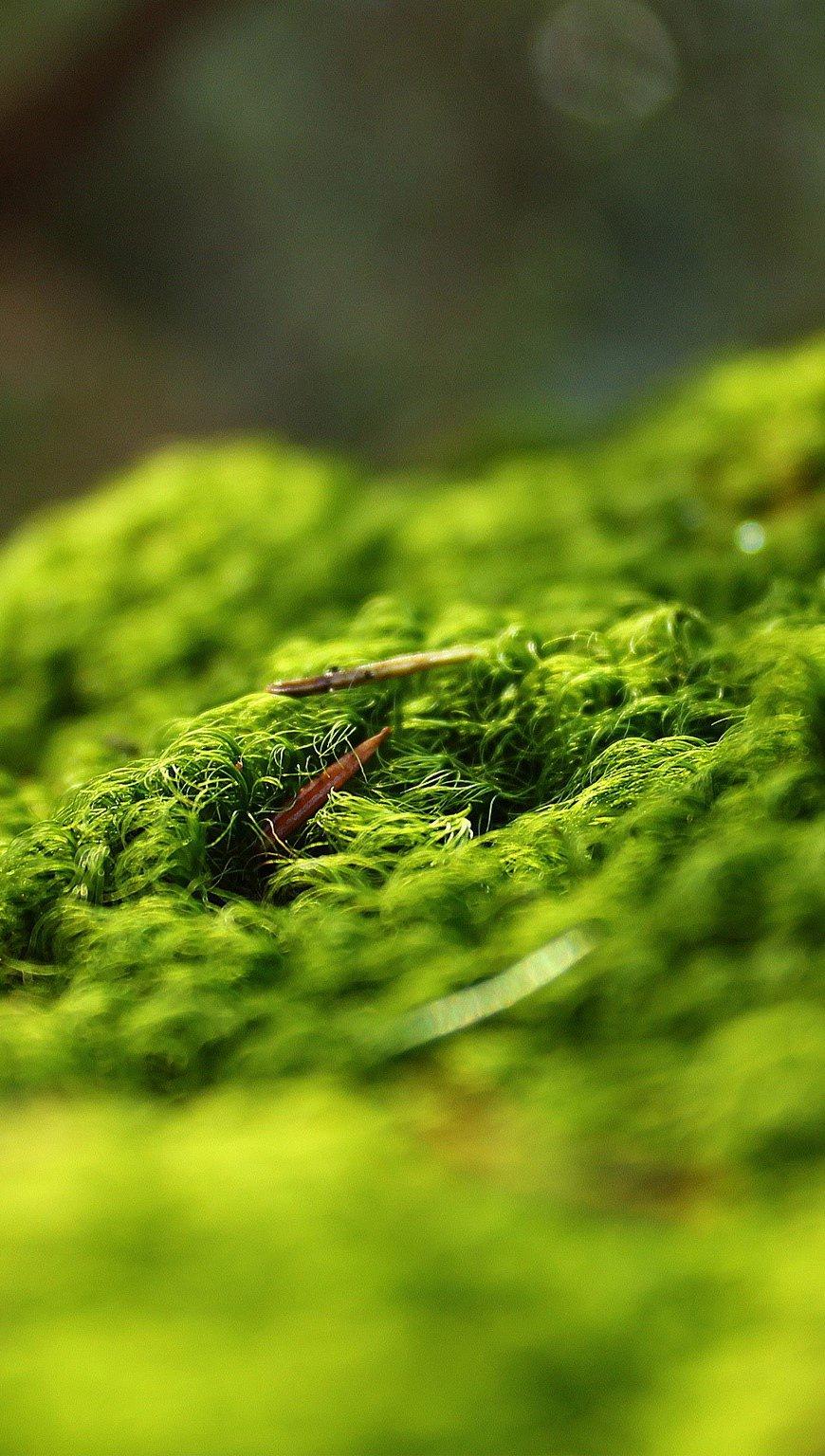 Fondos de pantalla Bosque en primavera Vertical
