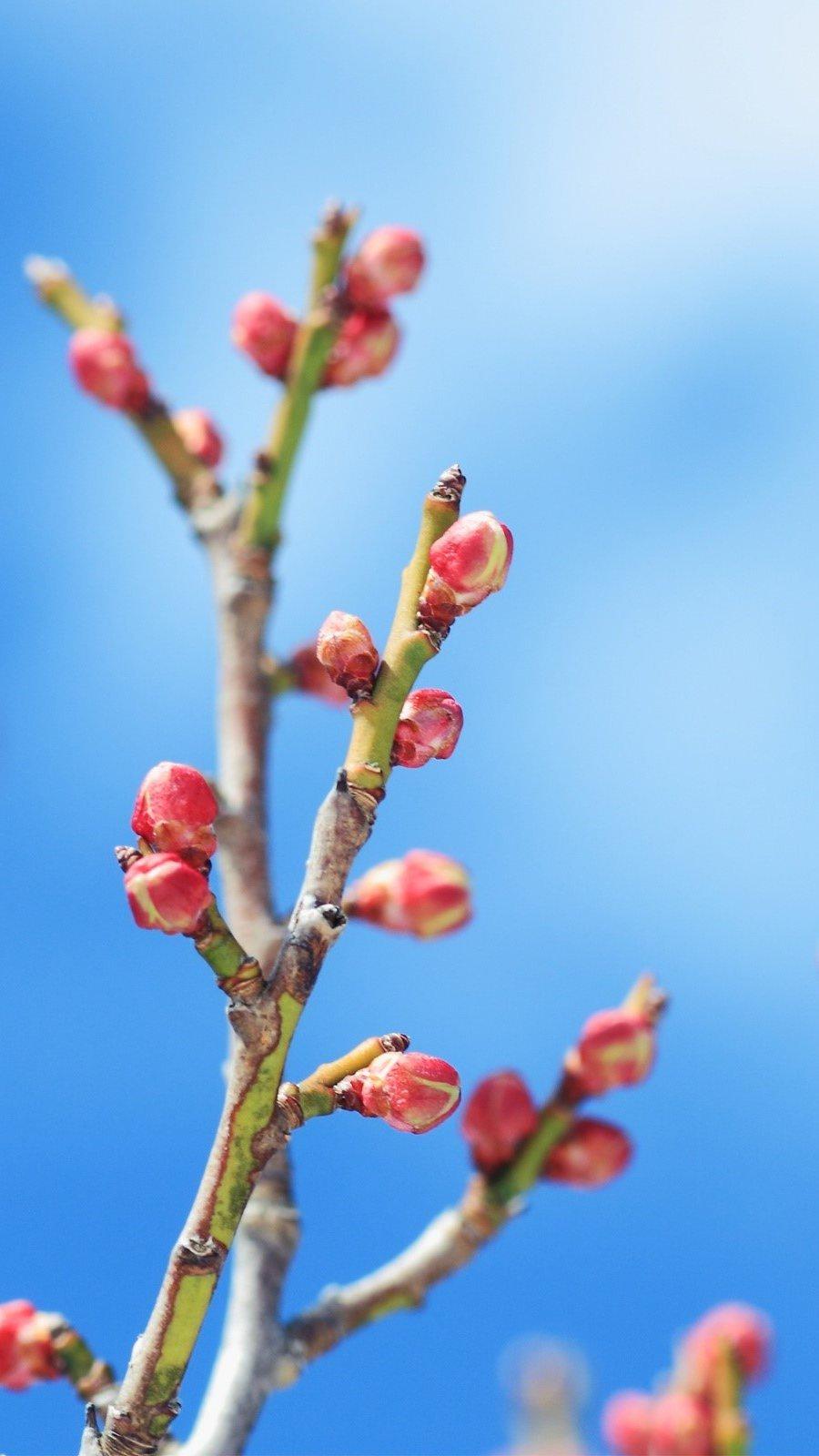 Wallpaper Floral buds Vertical
