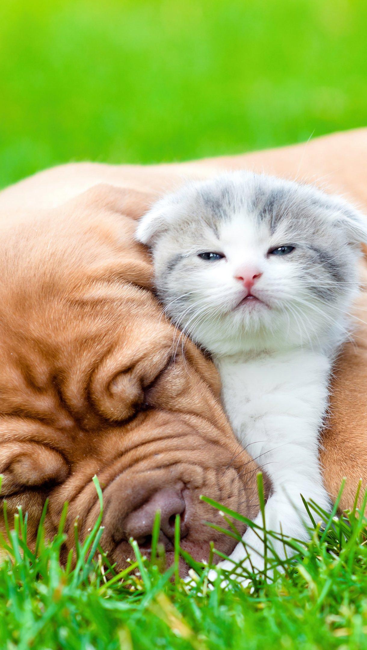 Fondos de pantalla Bulldog y gato Vertical