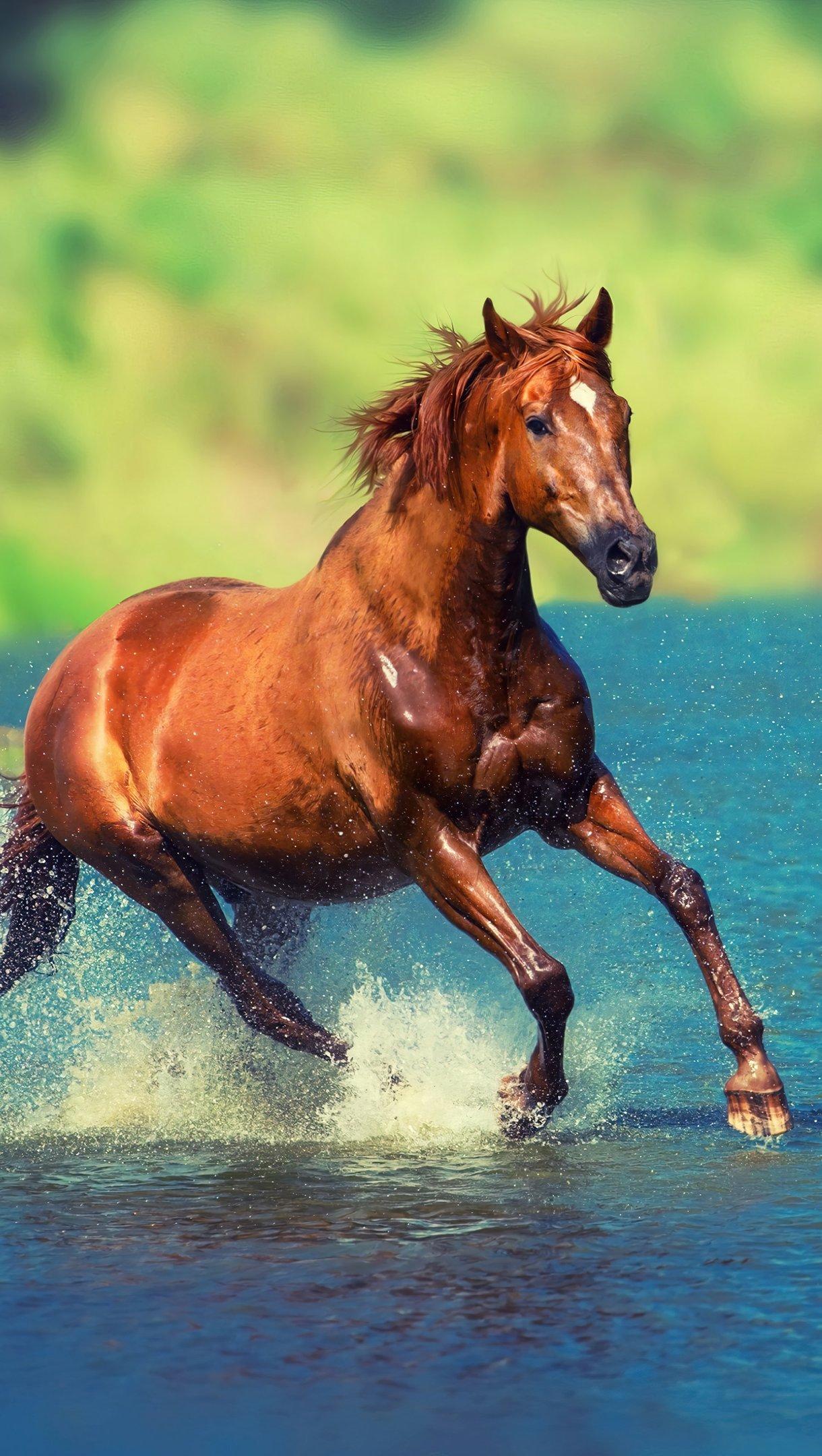 Wallpaper Horse running through water Vertical