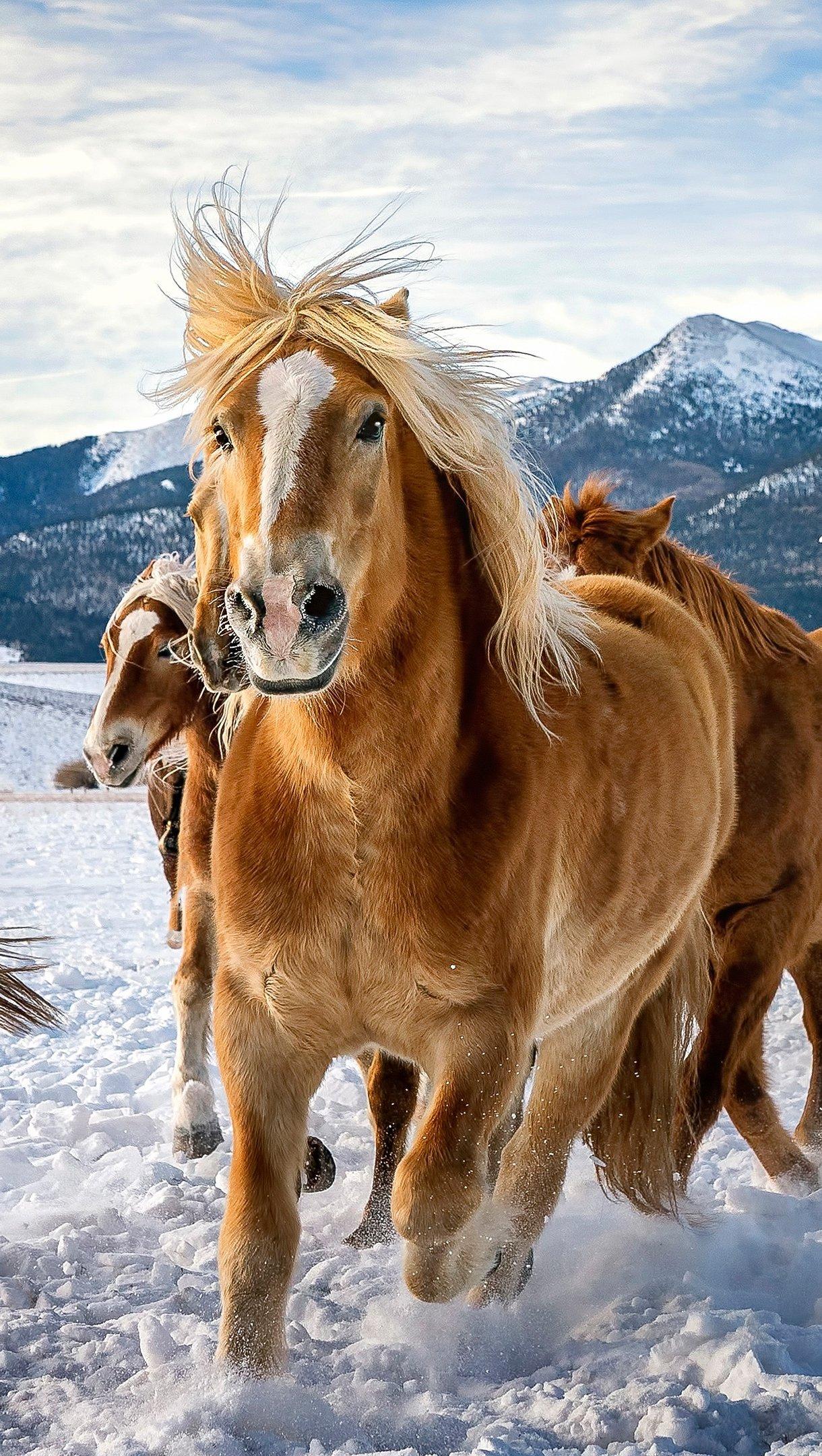 Wallpaper Horses running in the snow Vertical