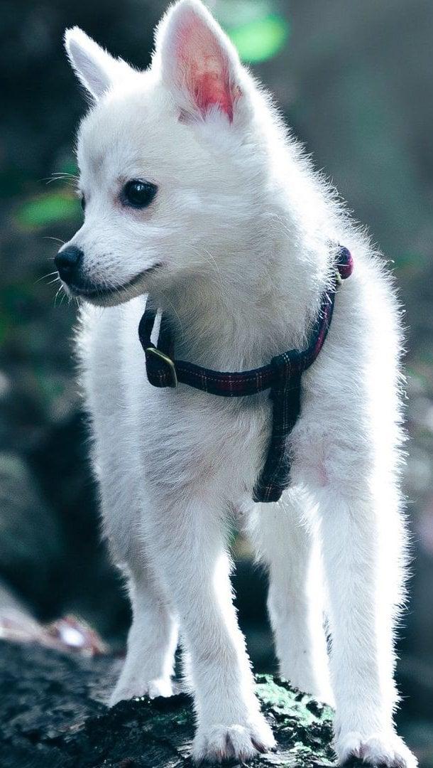 Fondos de pantalla Cachorro blanco Vertical