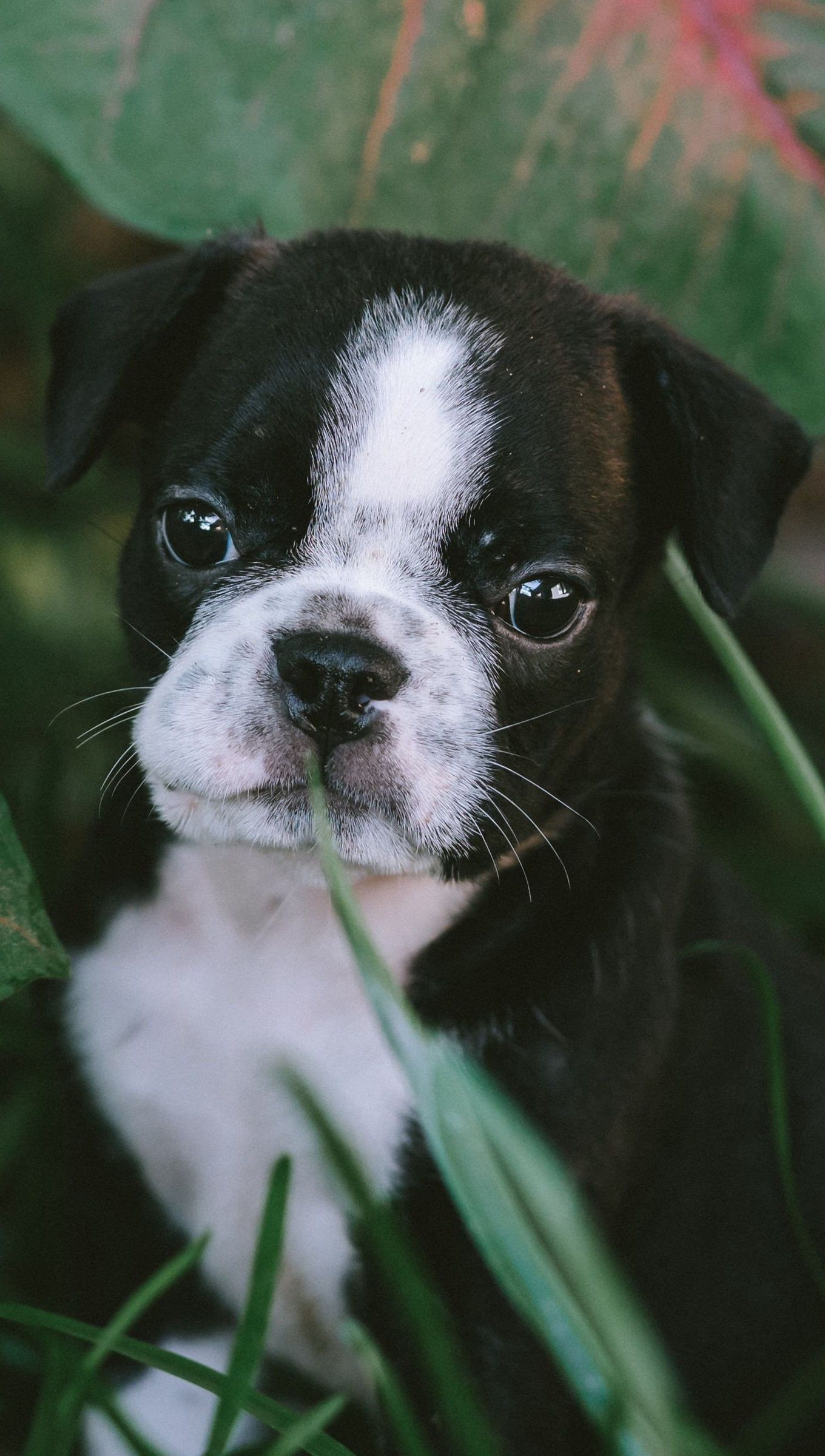 Fondos de pantalla Cachorro en jardín Vertical