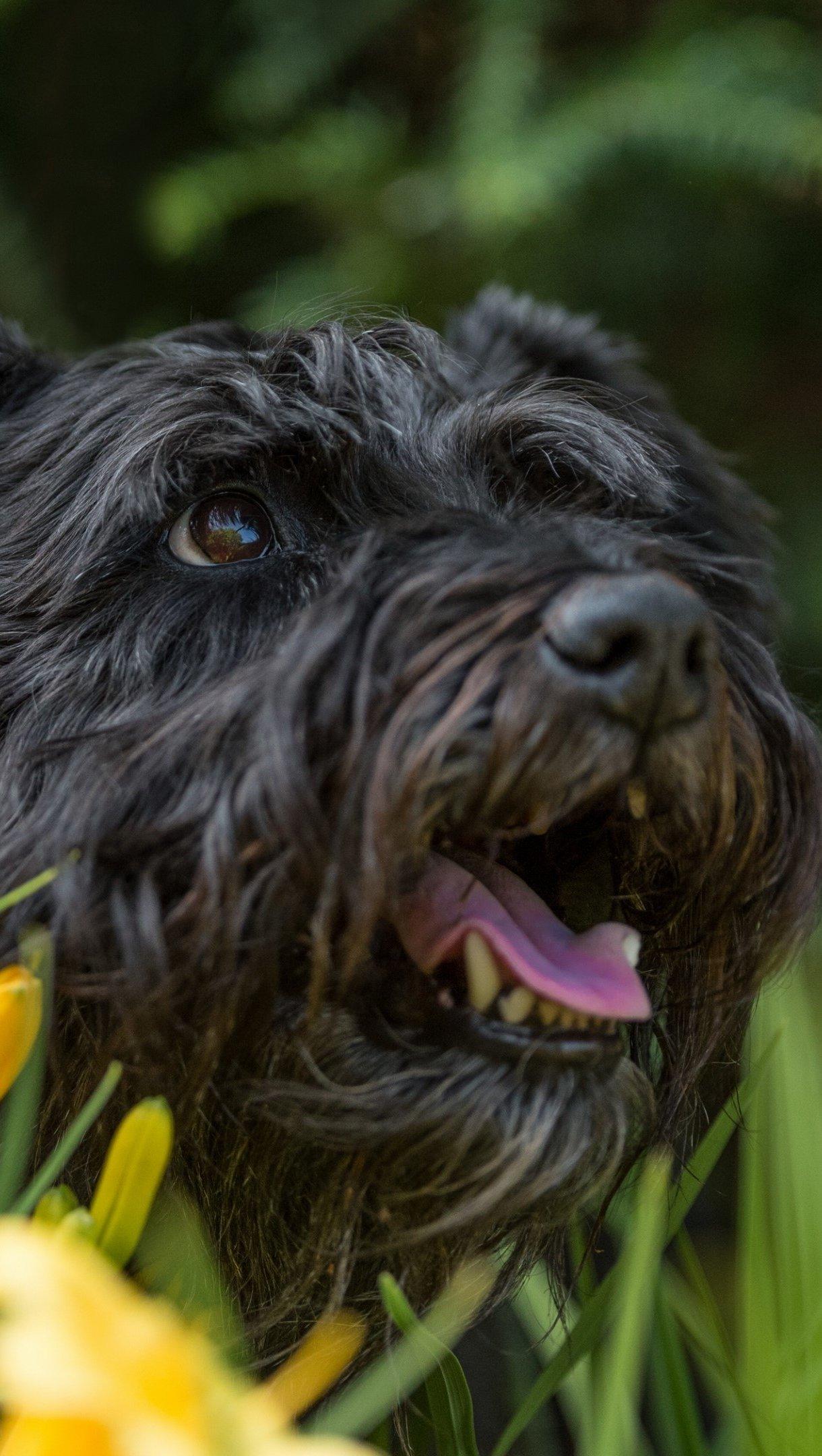 Fondos de pantalla Cachorro en un jardín Vertical