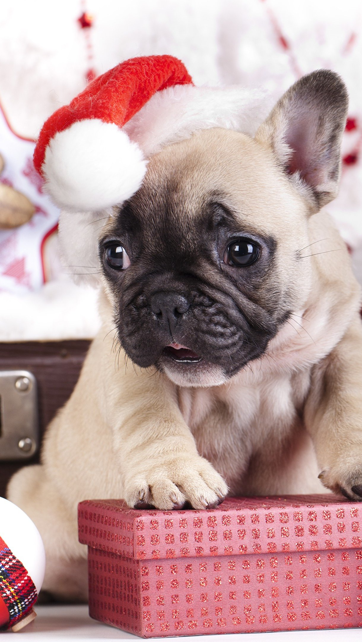 Wallpaper Pug puppy celebrating Christmas Vertical