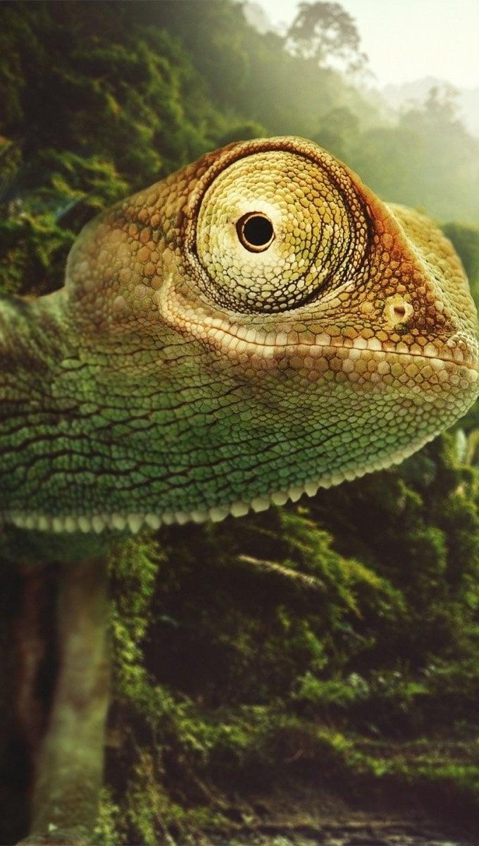 Wallpaper Chameleon Vertical