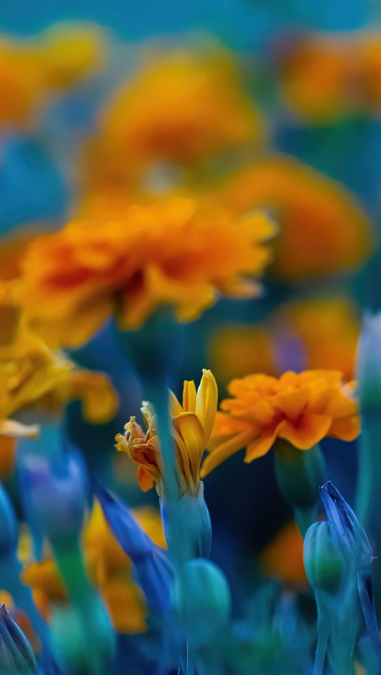 Fondos de pantalla Campo de flores amarillas Vertical