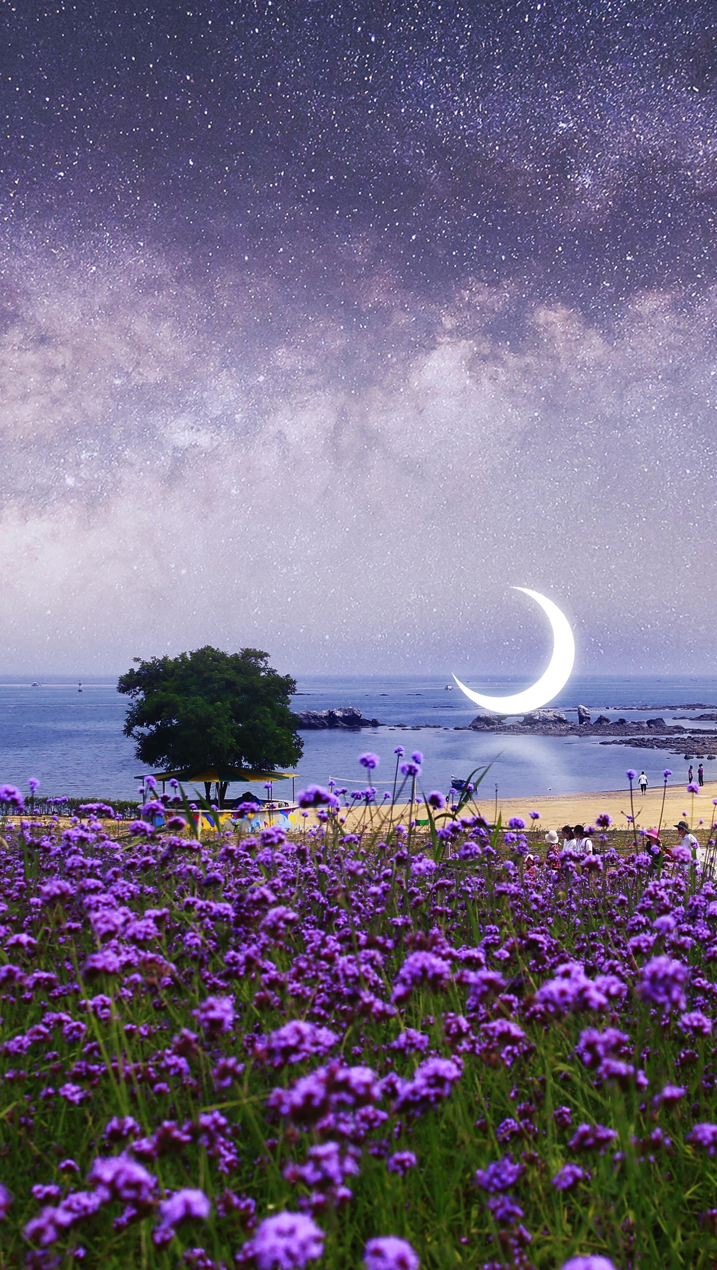 Fondos de pantalla Campo de lavanda en la playa bajo las estrellas Vertical