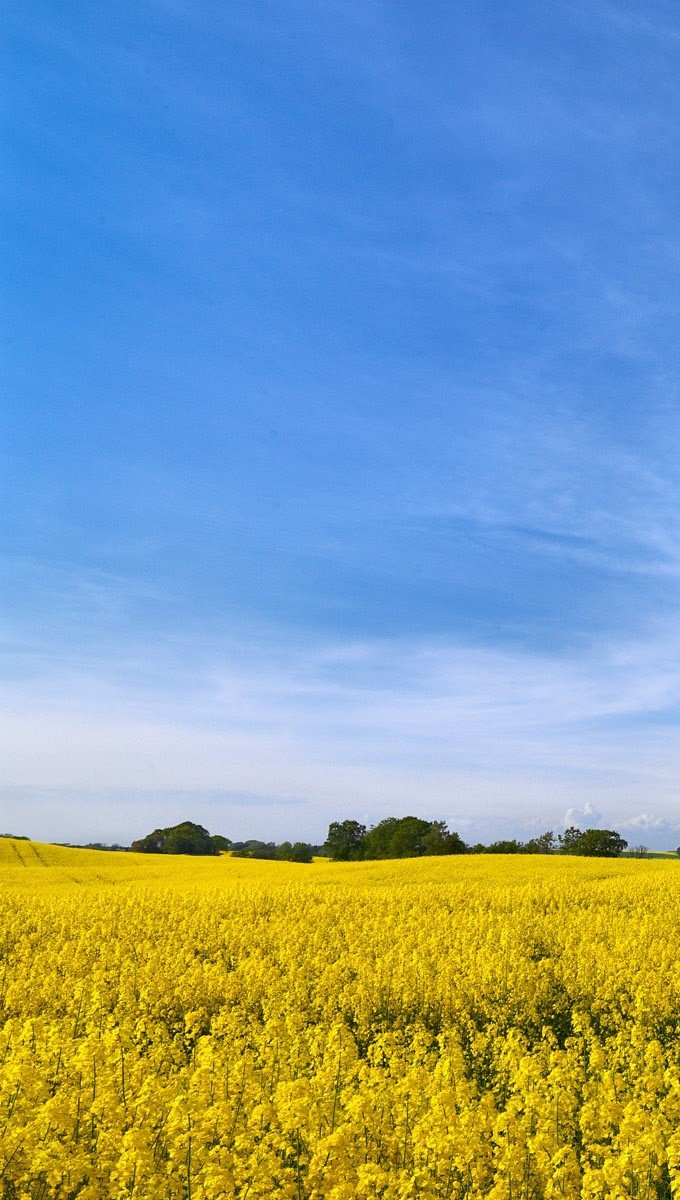 Wallpaper Swedish fields Vertical
