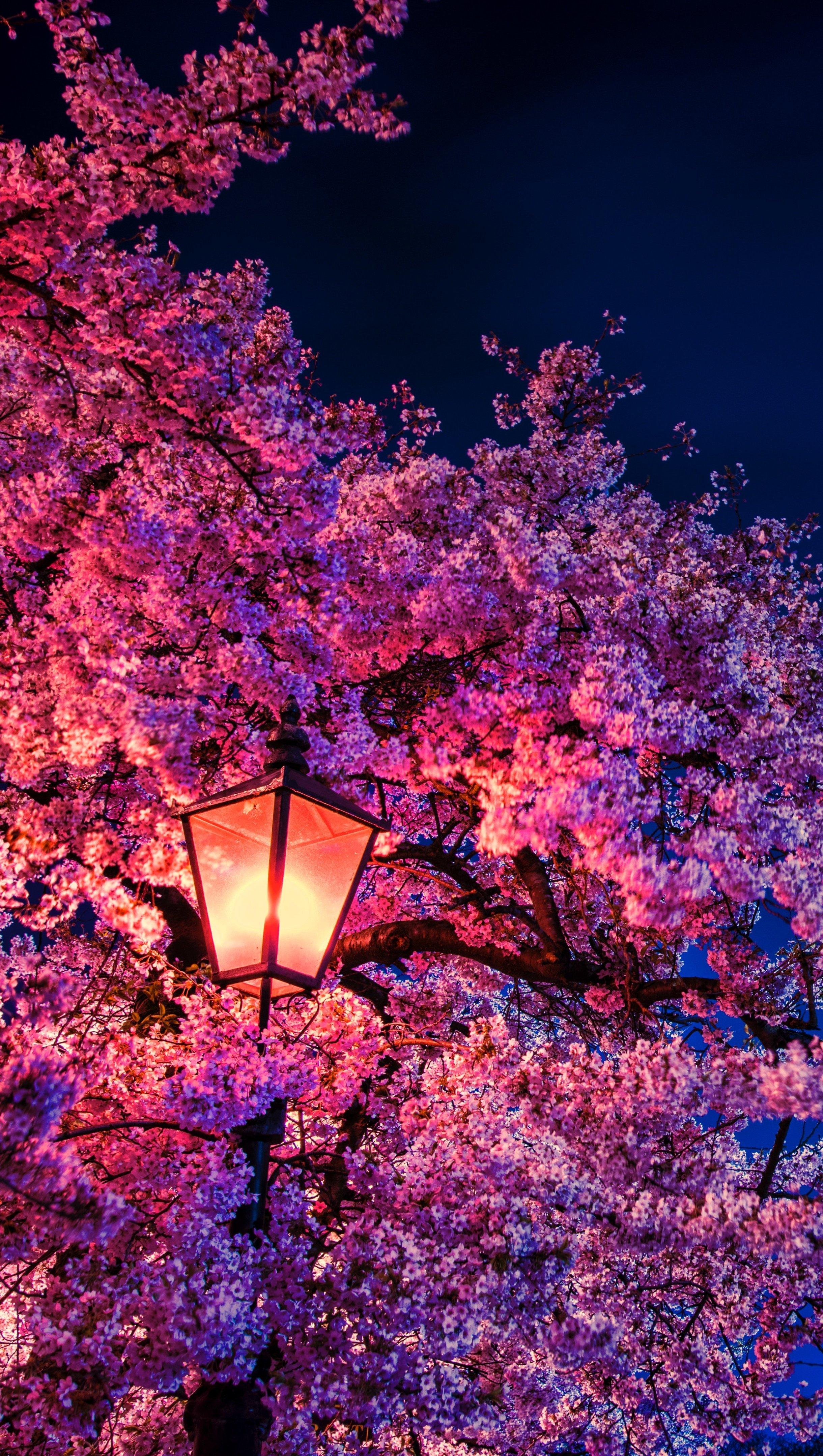 Fondos de pantalla Cerezo a la luz de la noche Vertical