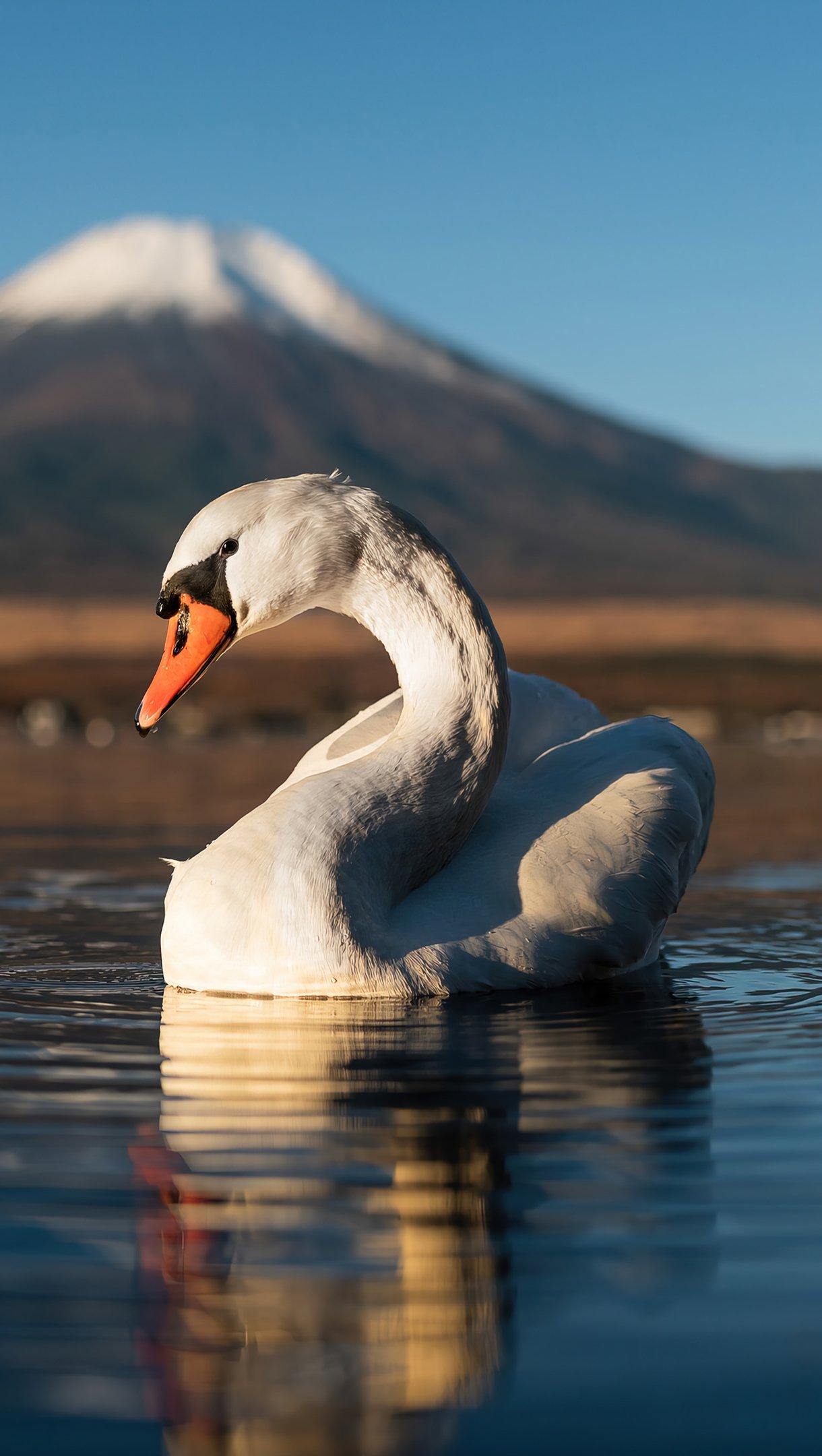 Wallpaper Swan in lake next to mountain Vertical