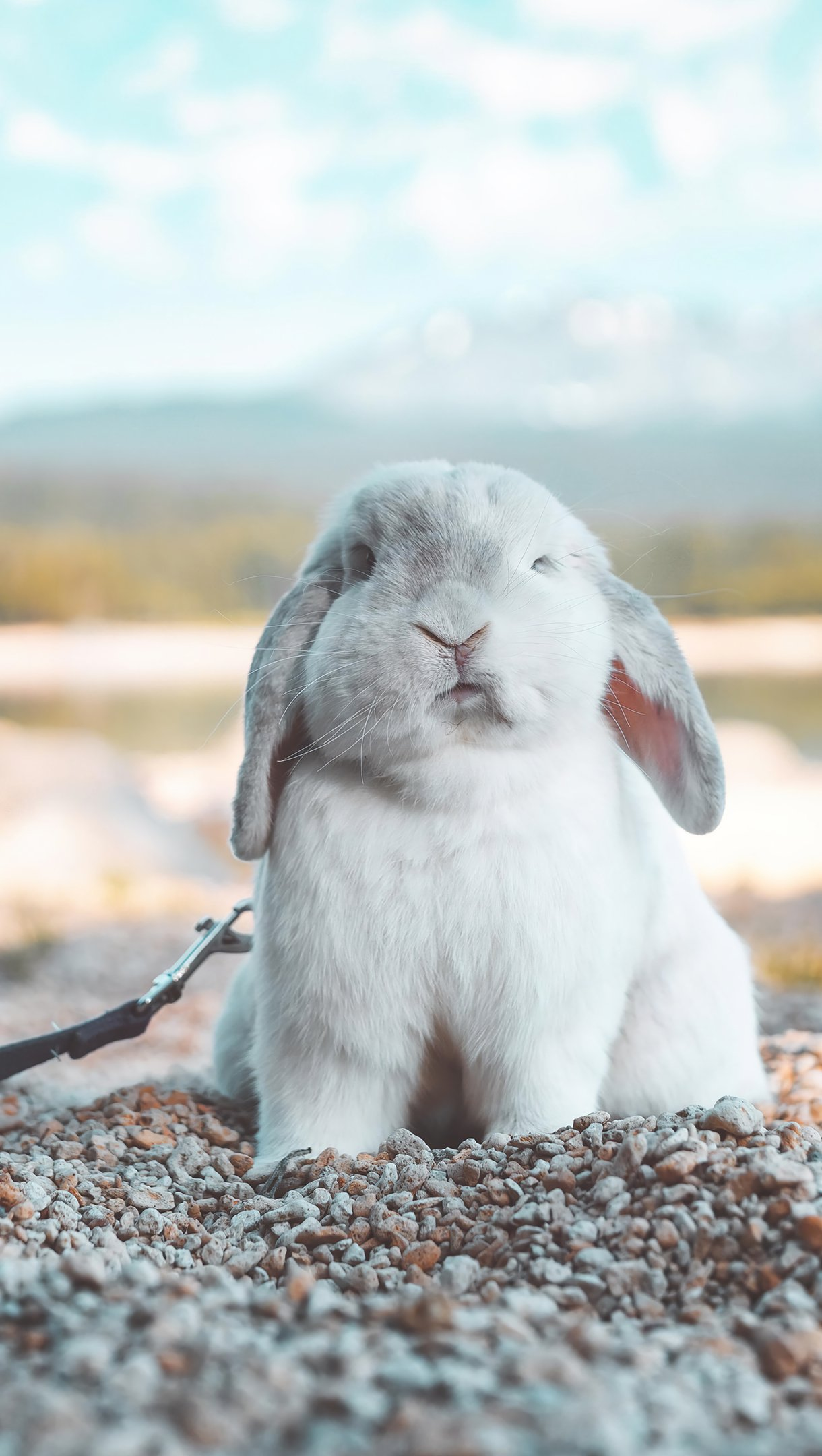 Fondos de pantalla Conejo Vertical