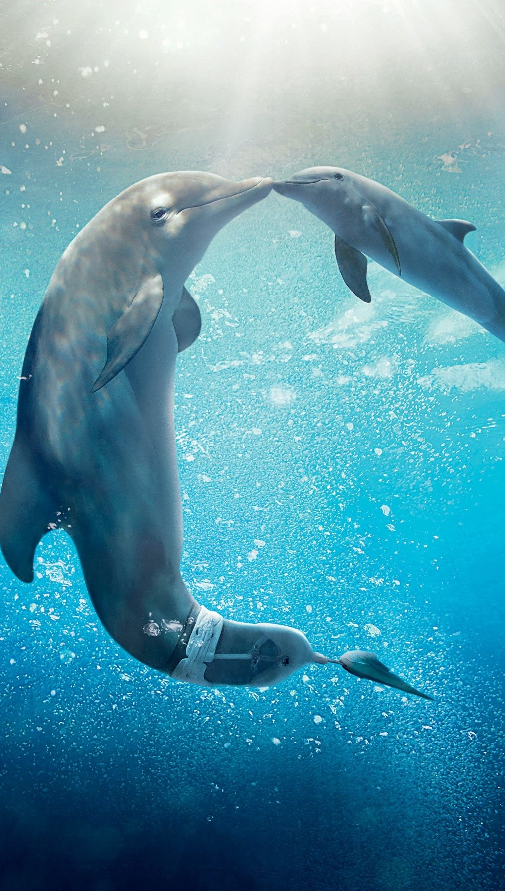 Wallpaper Dolphins Vertical