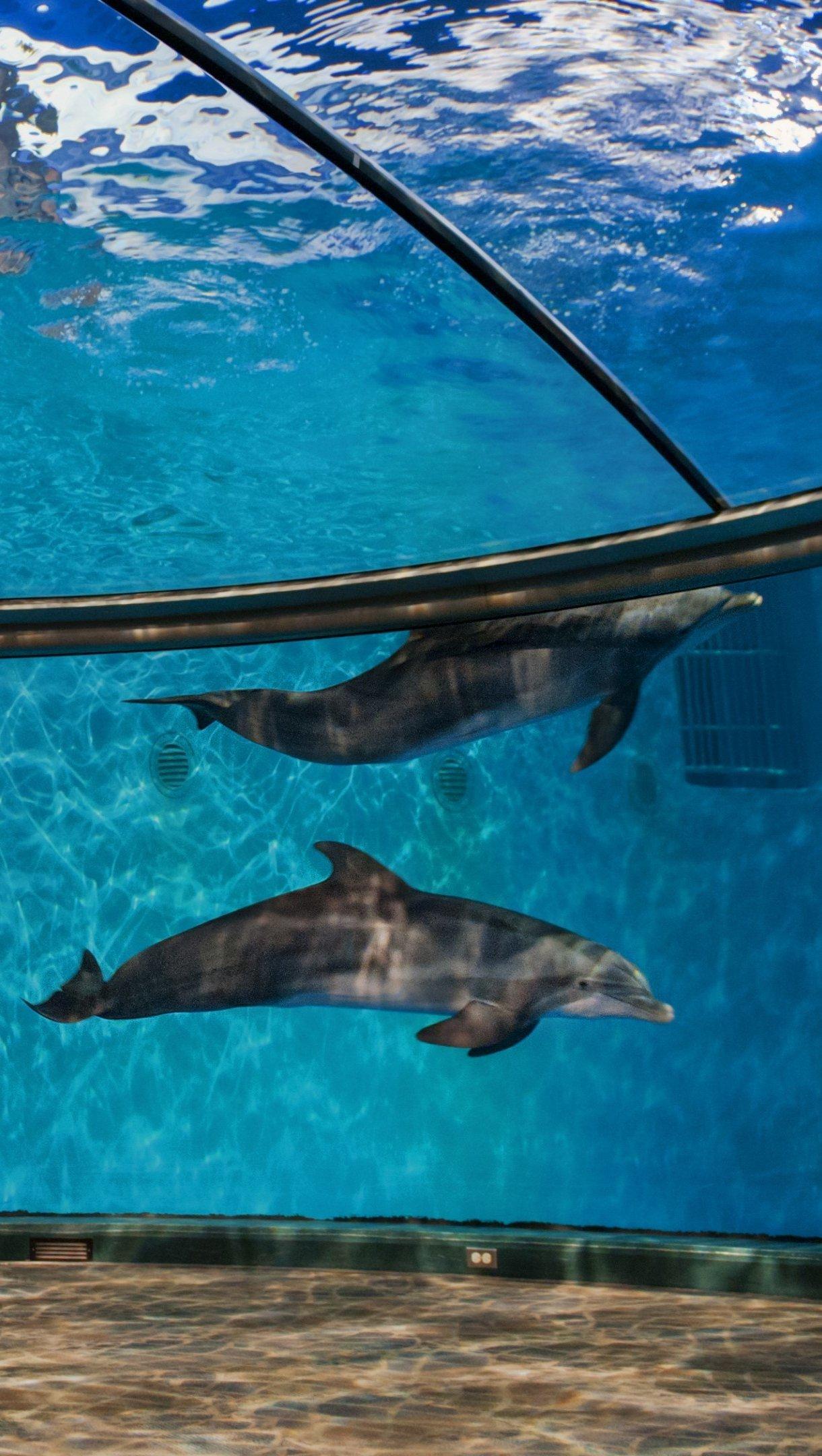 Fondos de pantalla Delfines del zoológico de Indianapolis Vertical