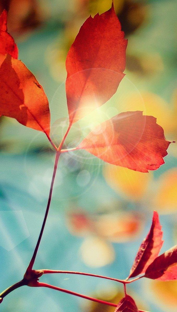 Fondos de pantalla Destello del otoño Vertical