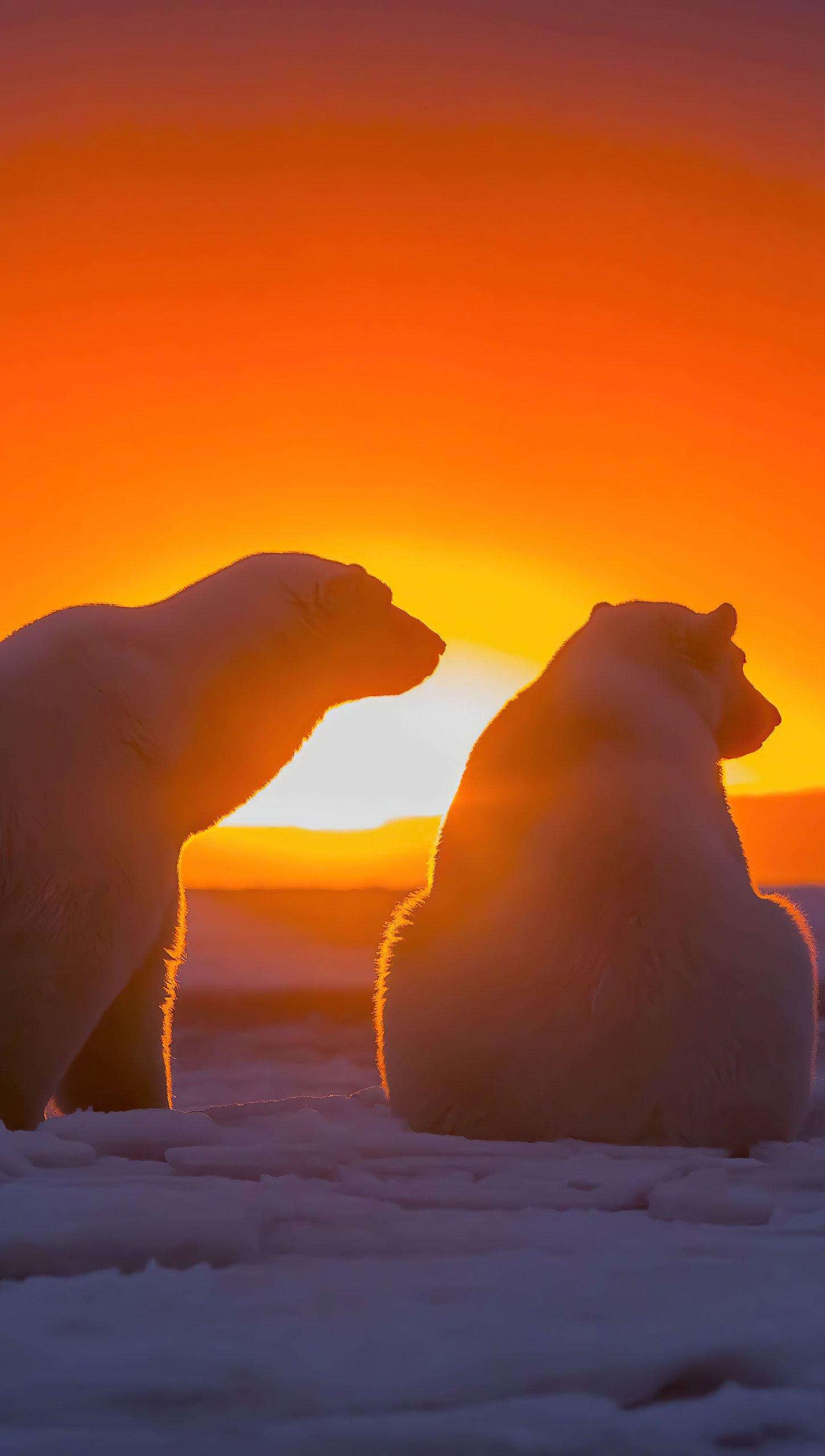 Fondos de pantalla Dos osos polares viendo el atardecer Vertical
