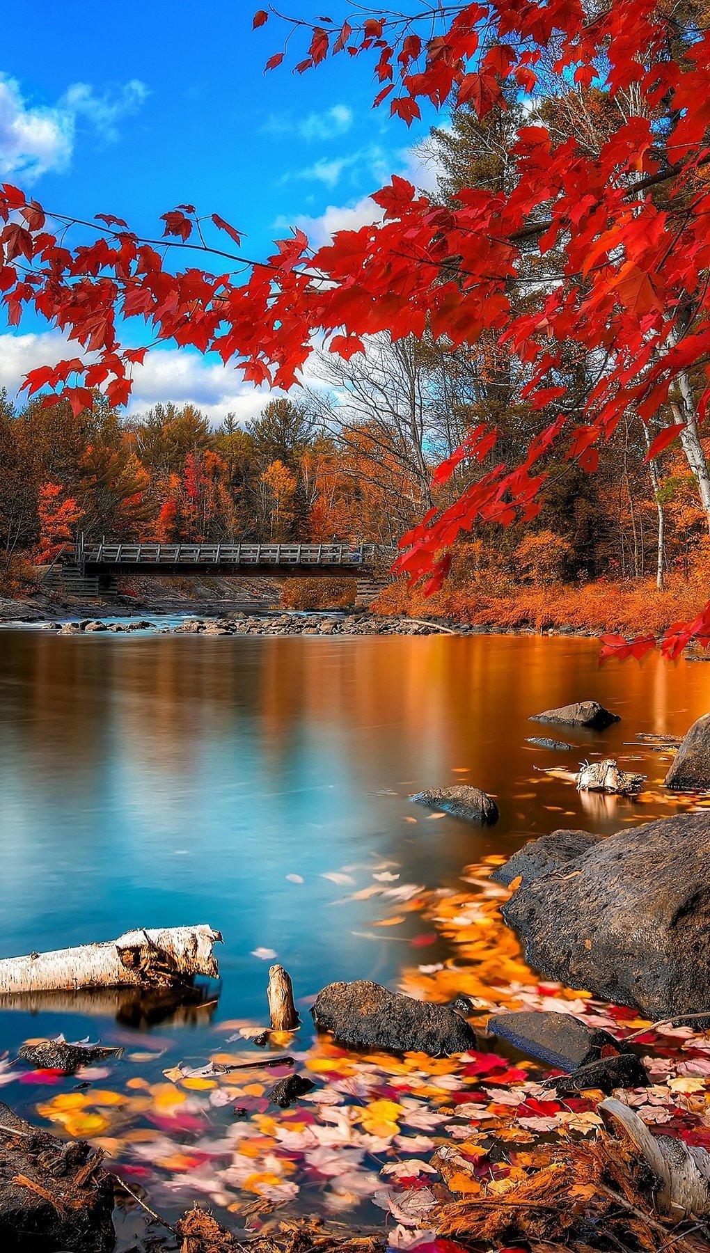 Fondos de pantalla El bosque en otoño Vertical
