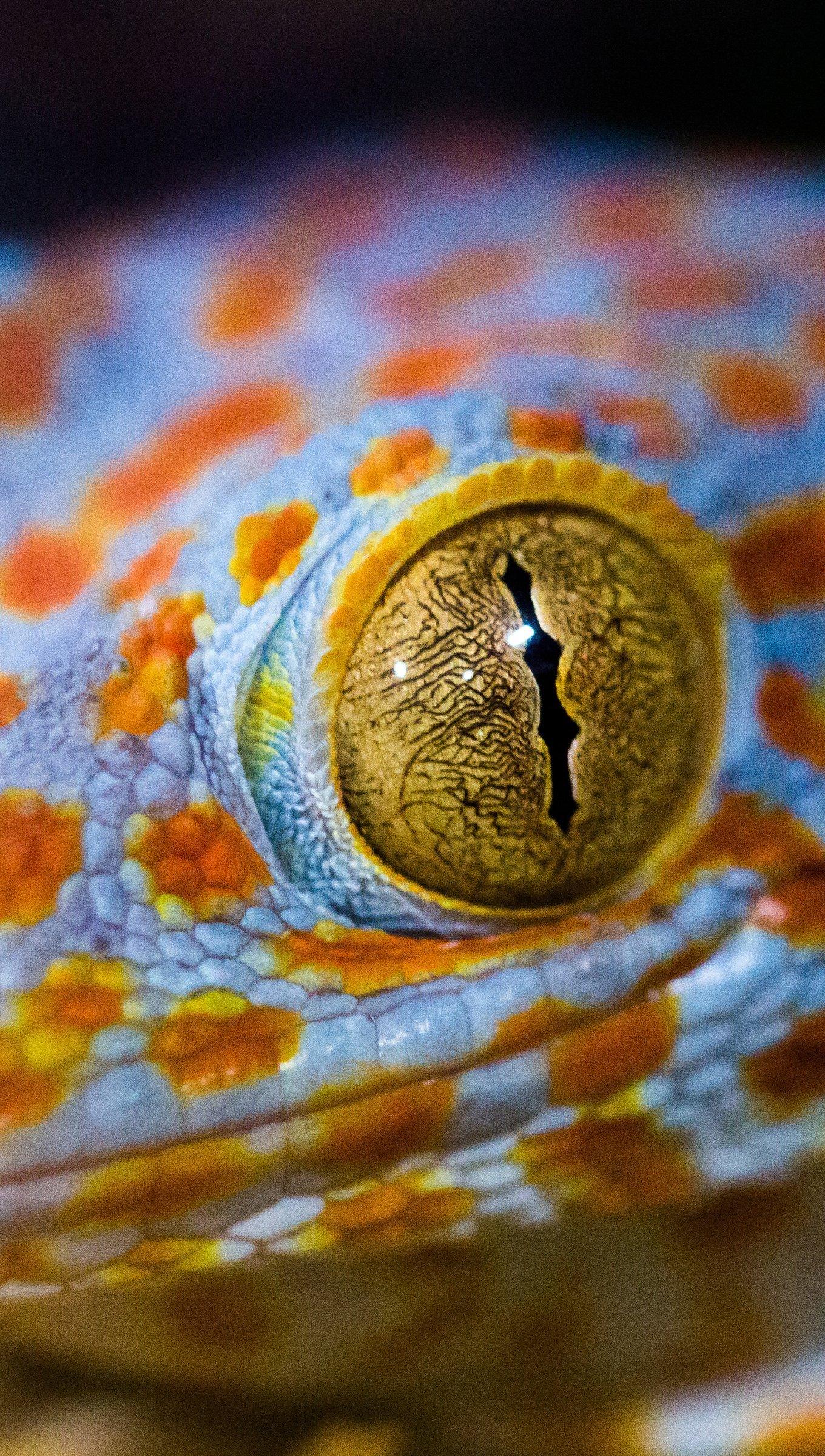 Fondos de pantalla El ojo de lagartija Vertical