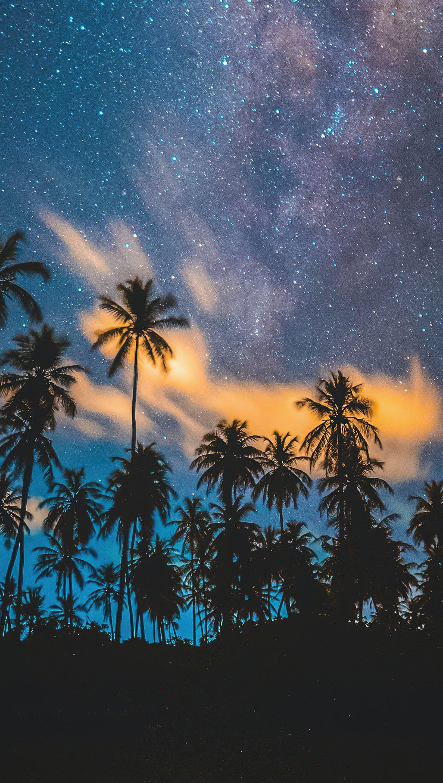 Fondos de pantalla Estrellas con palmas tropicales Vertical