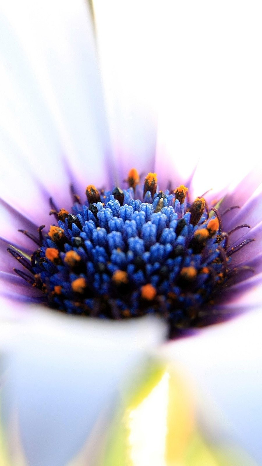 Wallpaper White and purple flower Vertical