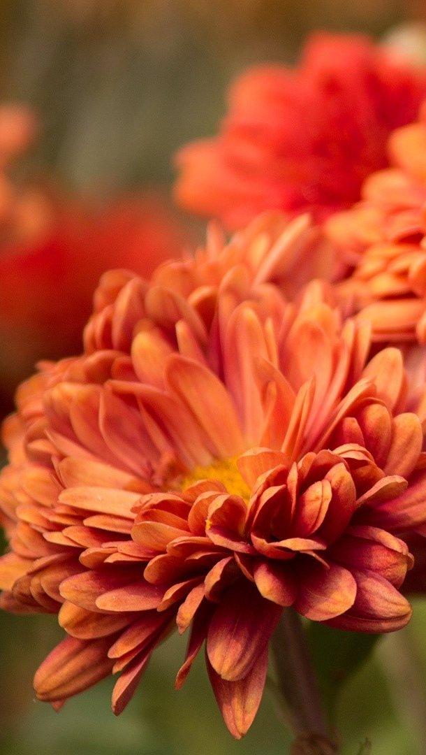Fondos de pantalla Flor bug Vertical
