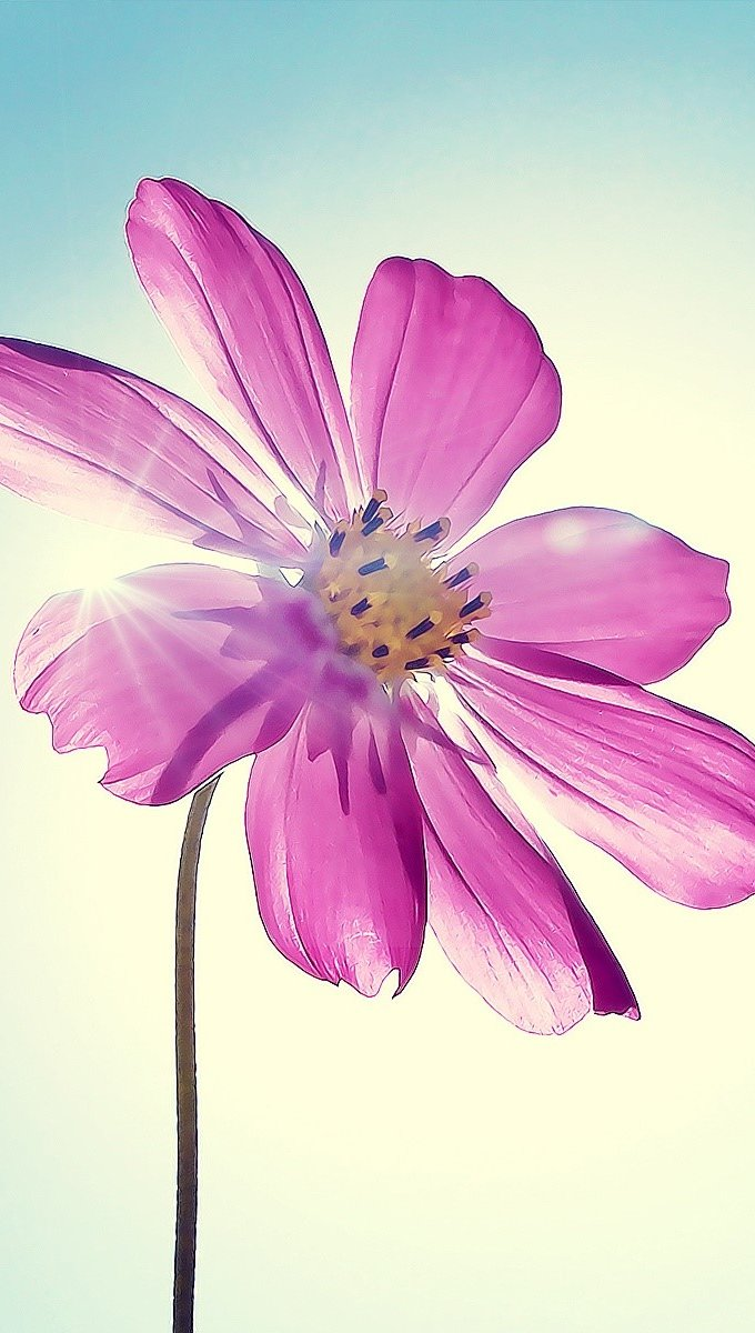 Wallpaper Magenta flower Vertical