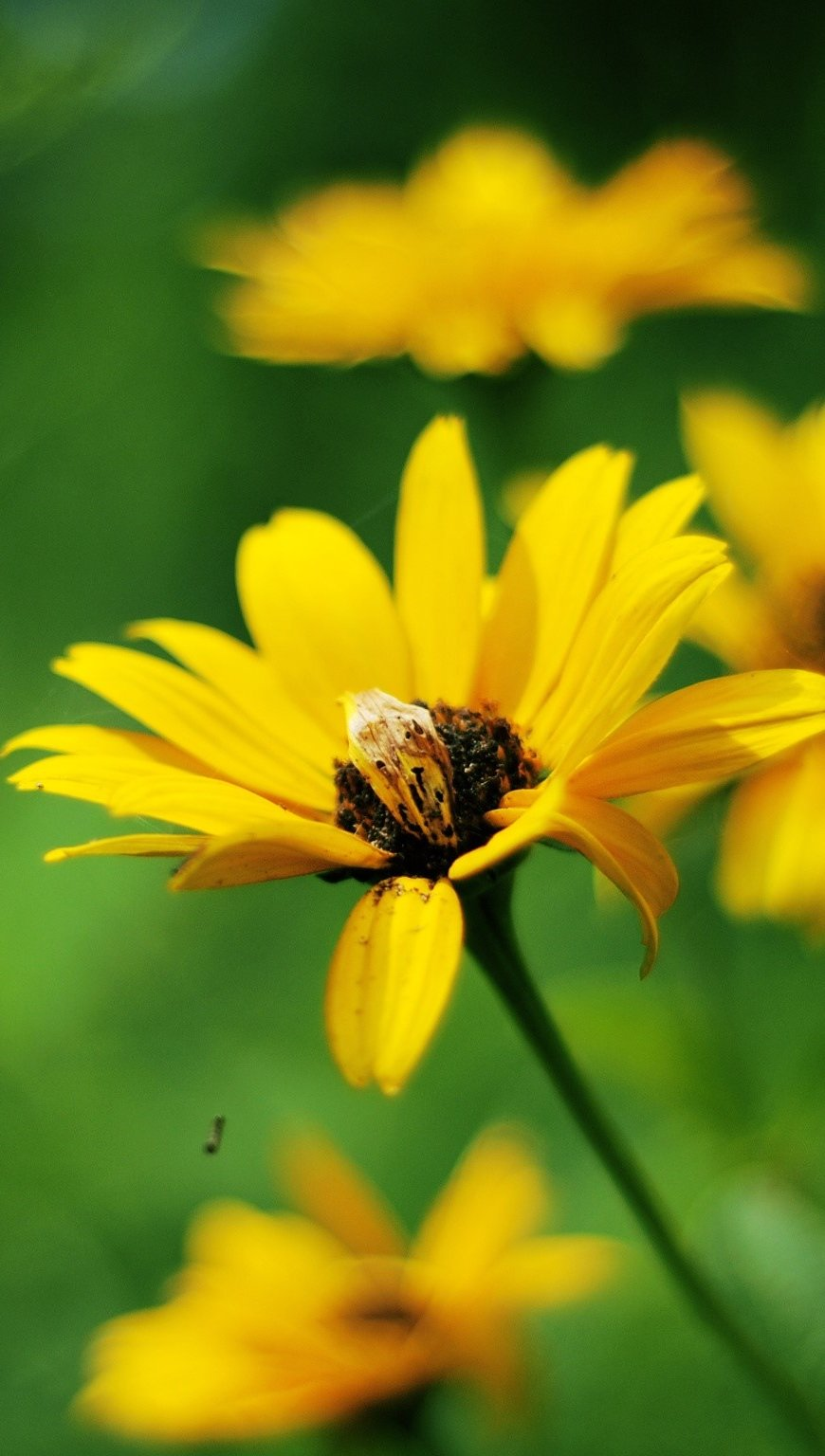 Fondos de pantalla Flores amarillas Vertical
