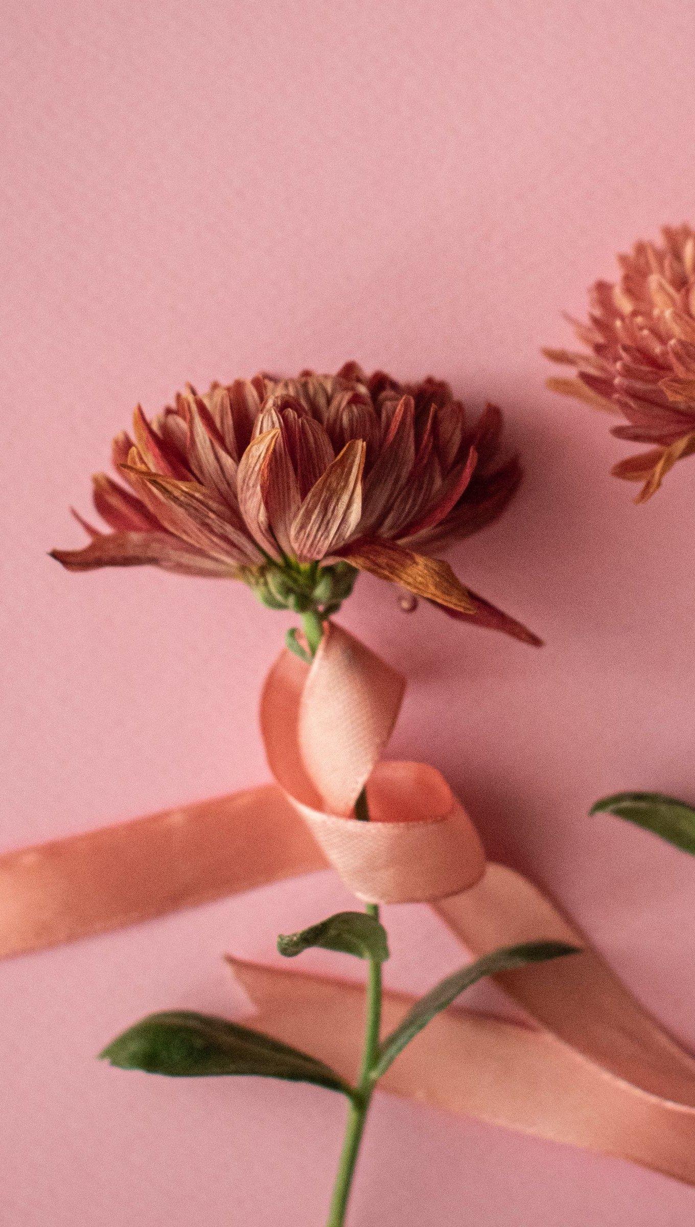 Fondos de pantalla Flores con listón rosa Vertical
