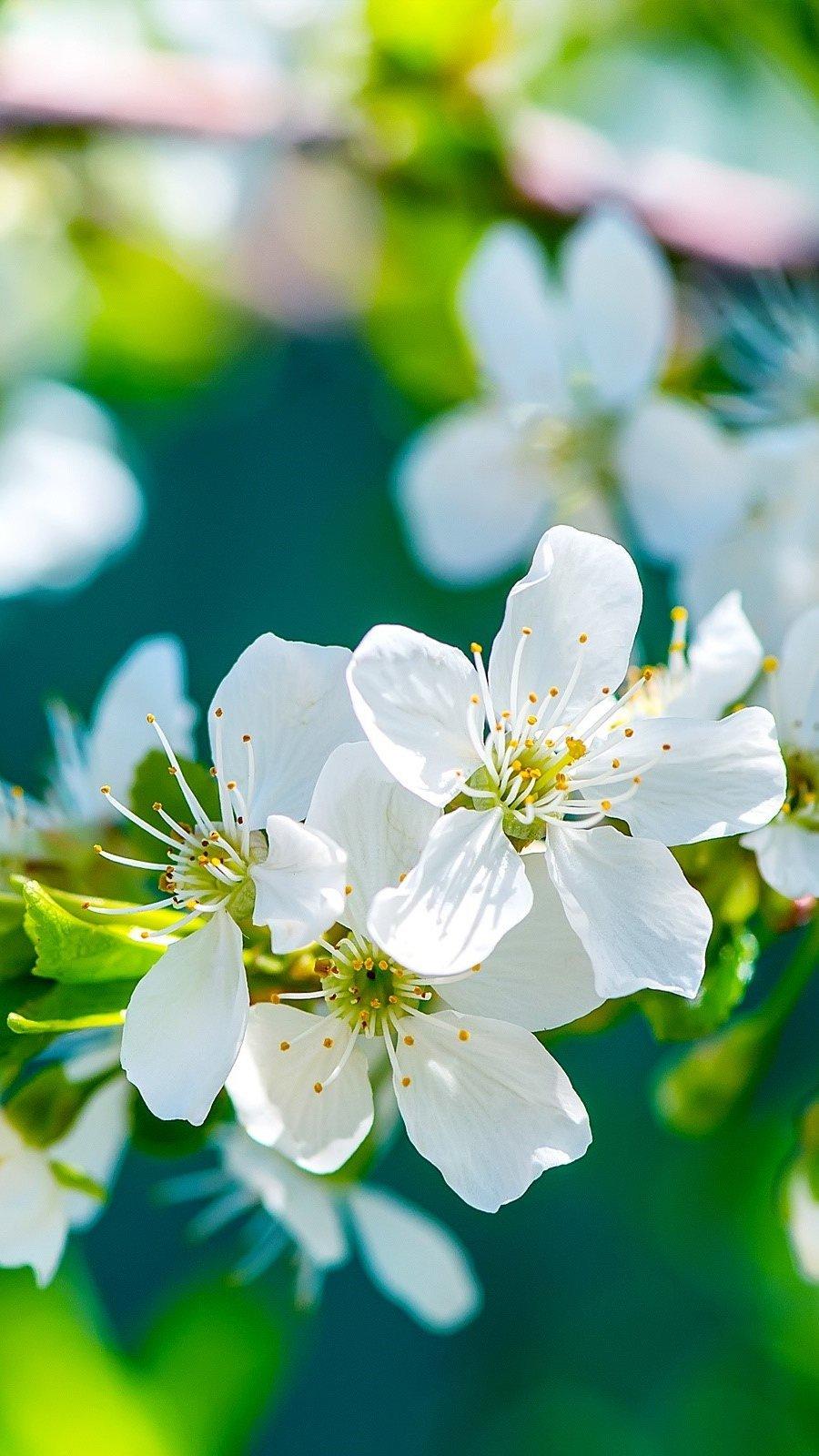 Wallpaper Flowers of an apple tree Vertical
