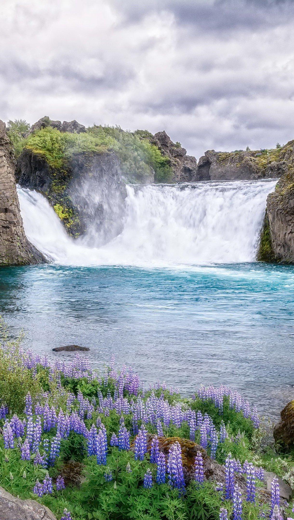Fondos de pantalla Flores en lago y montañas Vertical