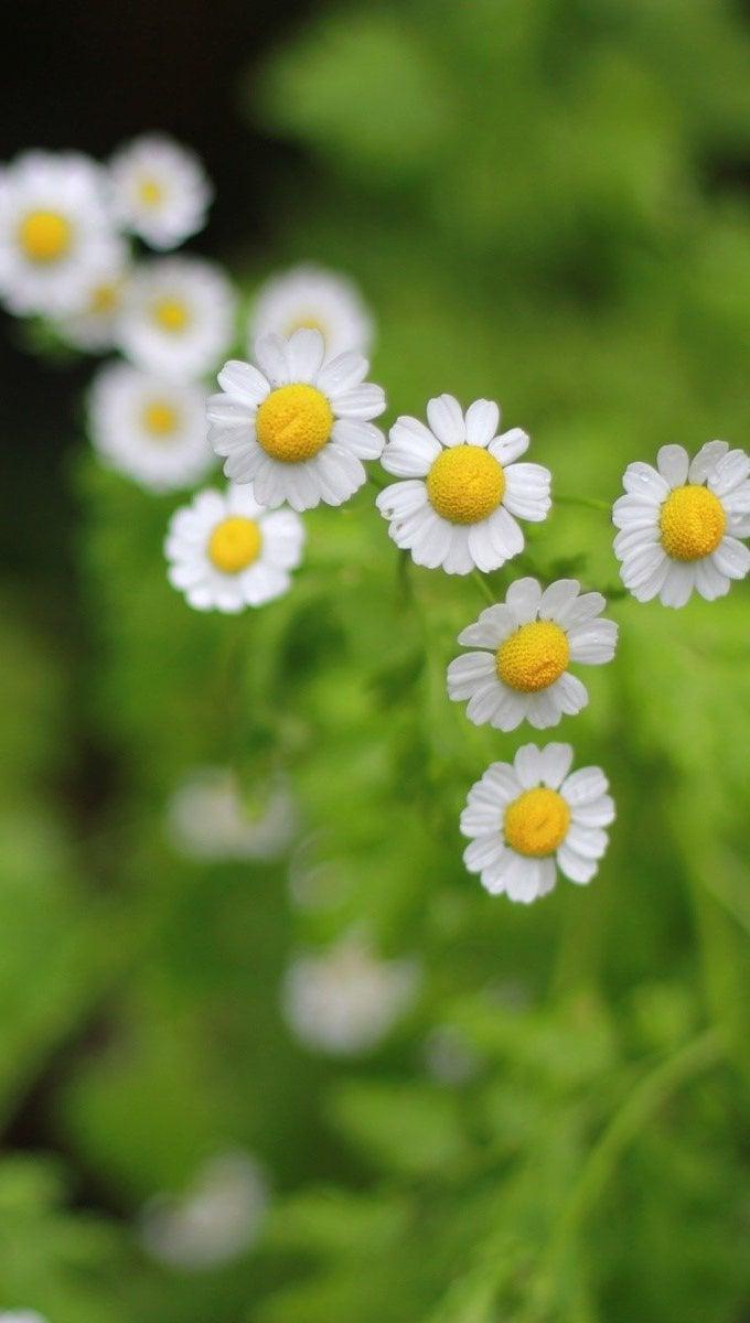 Wallpaper Flowers in a garden Vertical